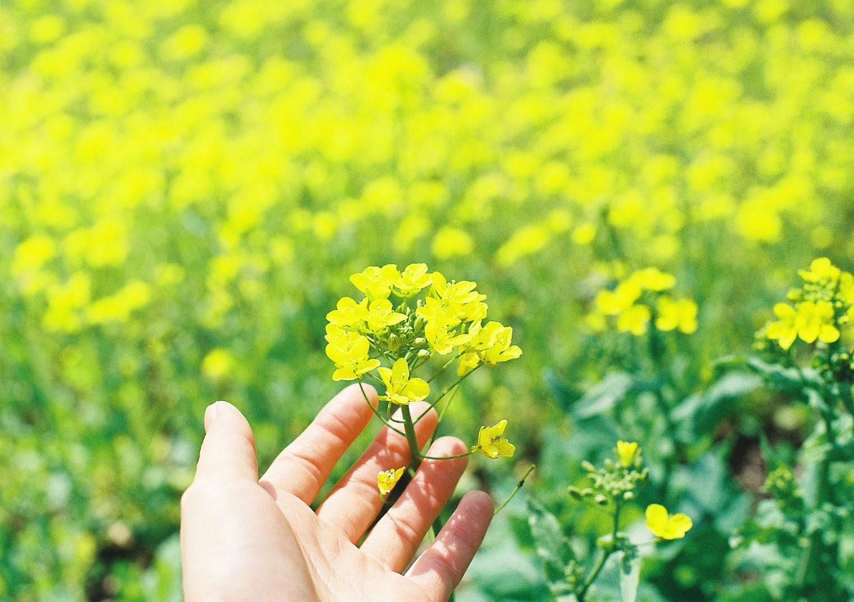 【Nikon】春を思い返す