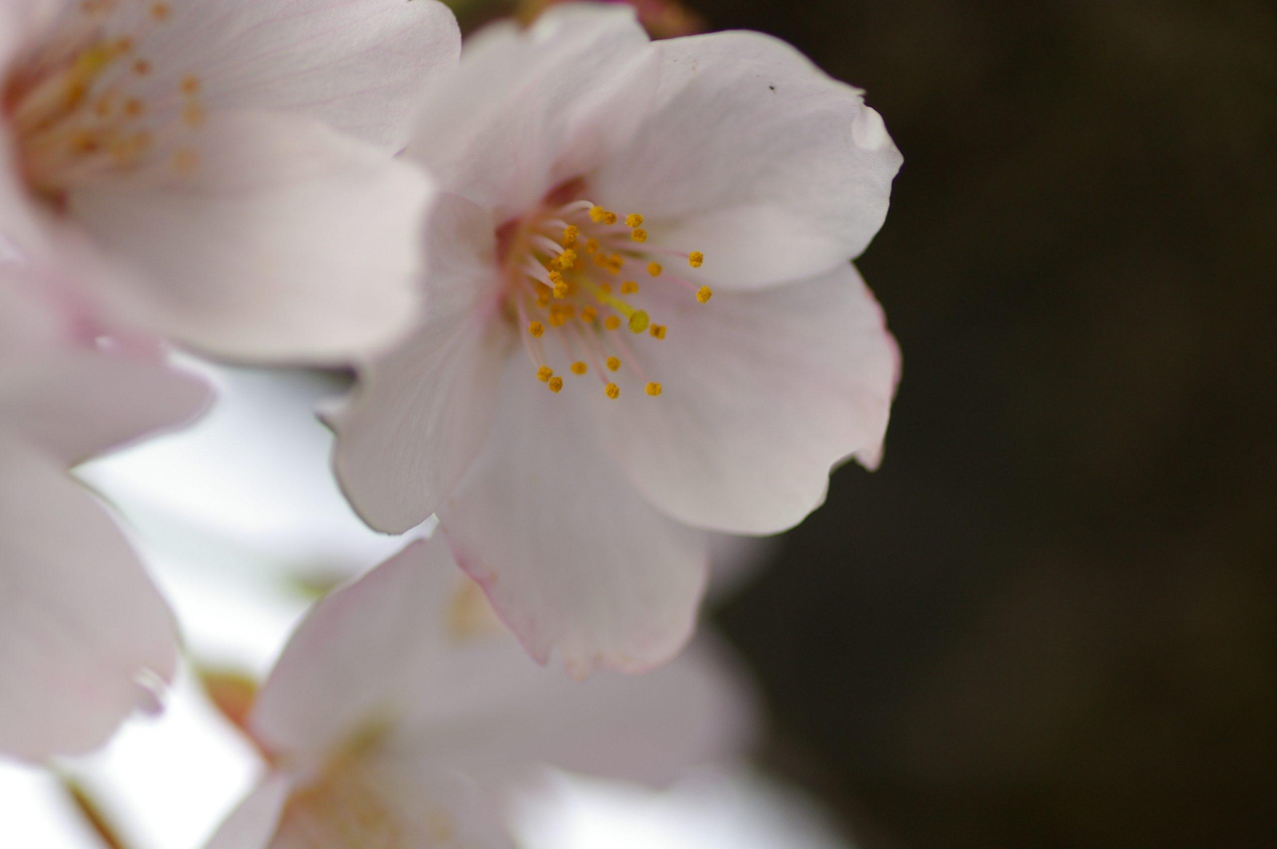 【PENTAX】写真整理でちょっとお花見