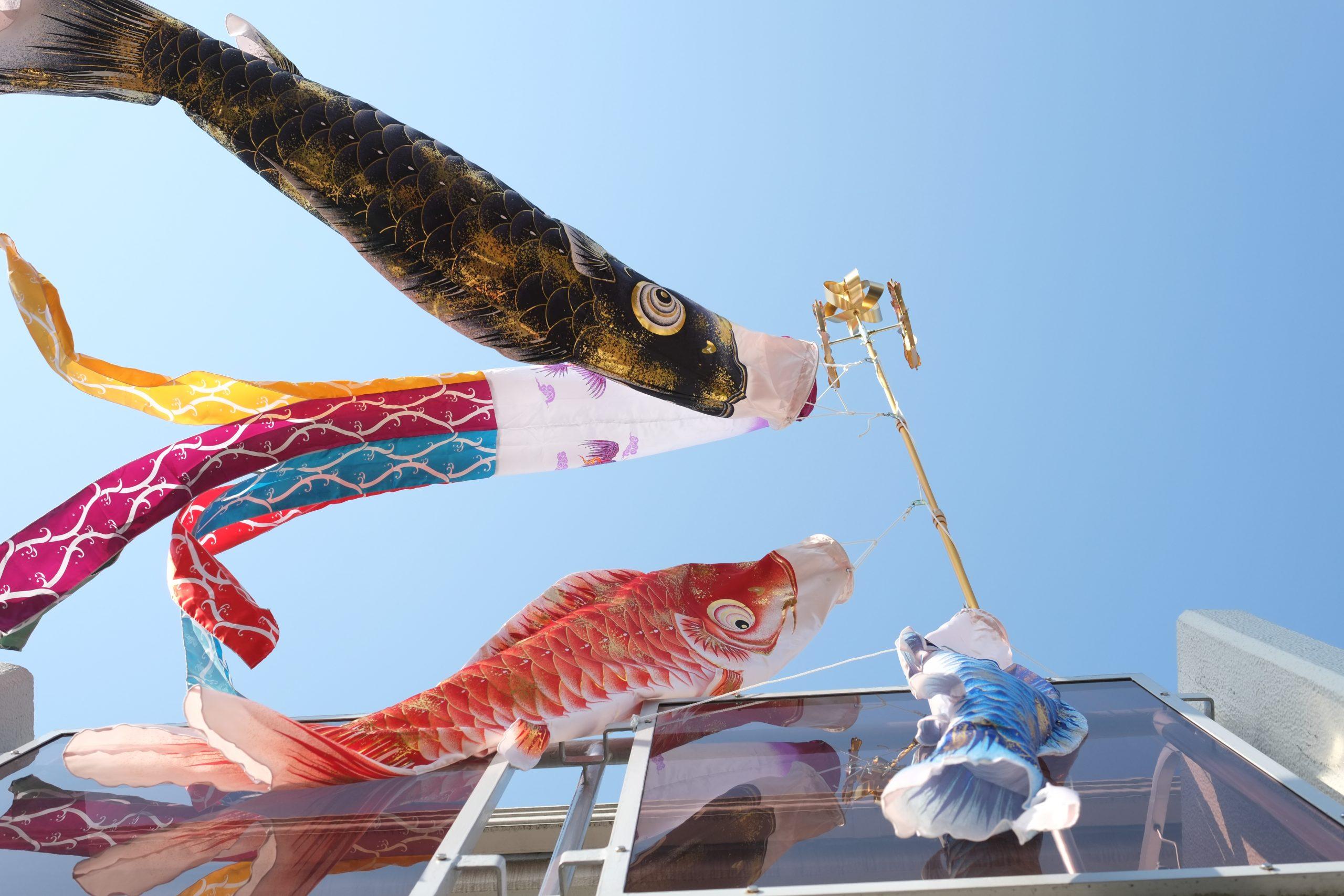 【マイストックフォト】 鯉のぼりの季節