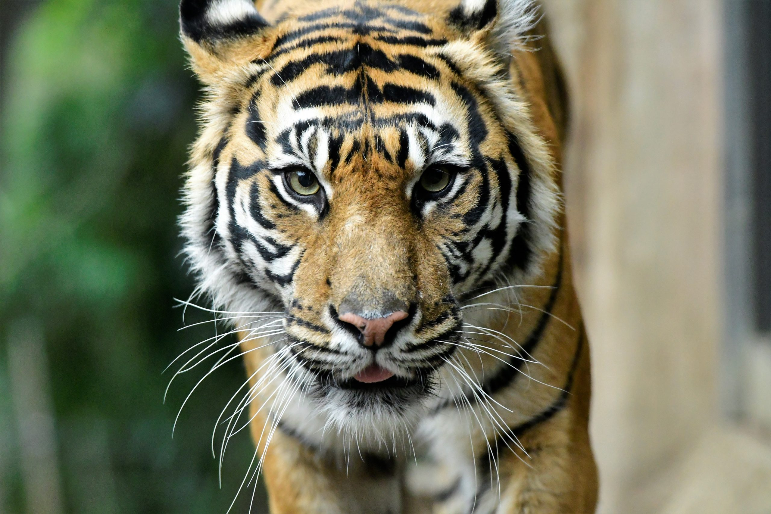 【Nikon】動物園でポートレート!
