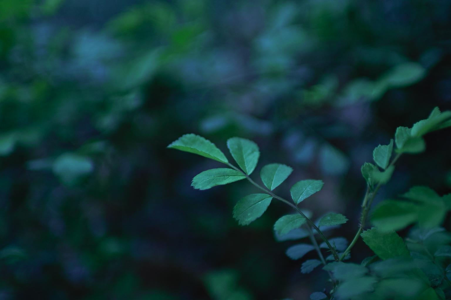 【SIGMA】FOVEONで植物撮影
