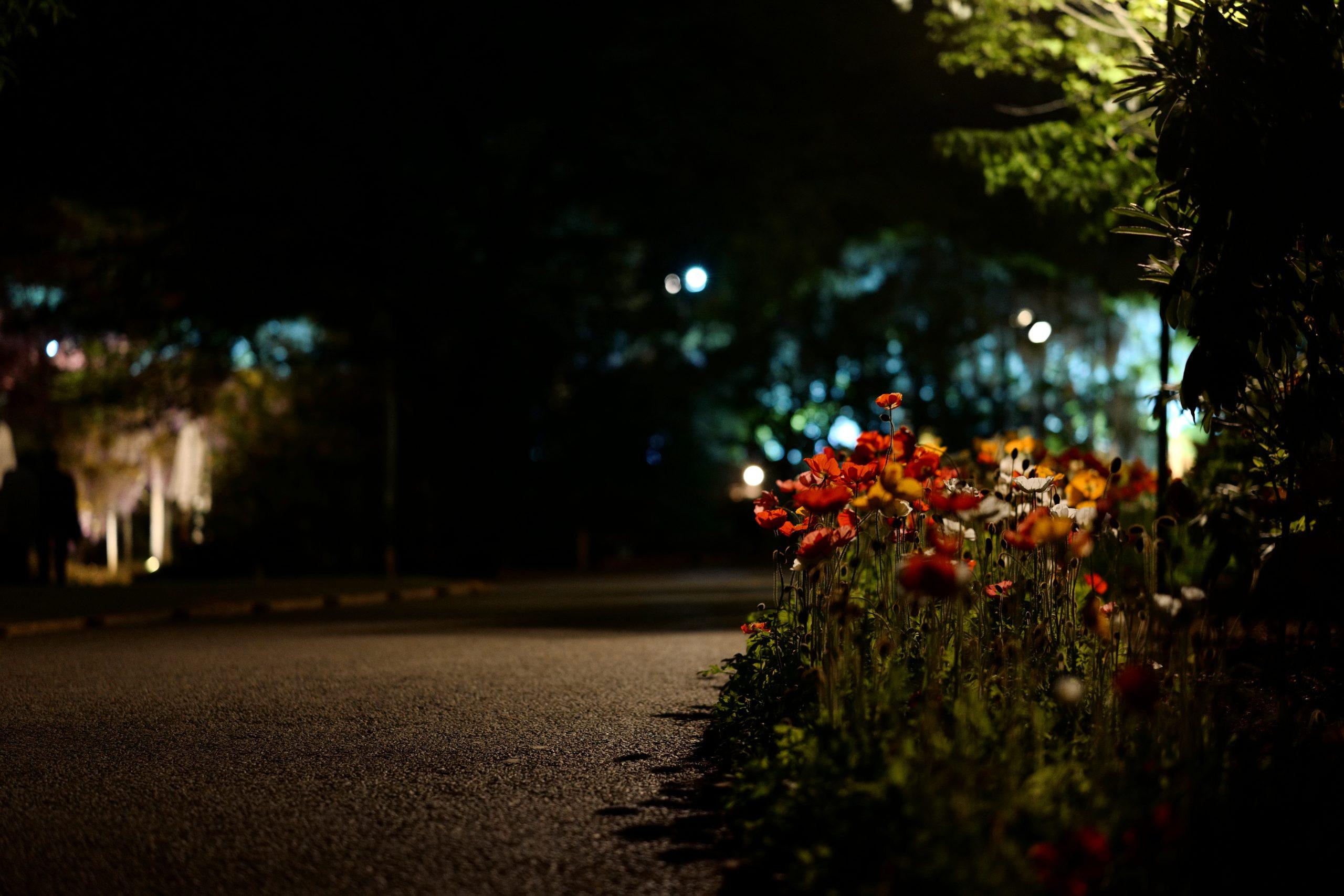 【Leica】SLと夜の花