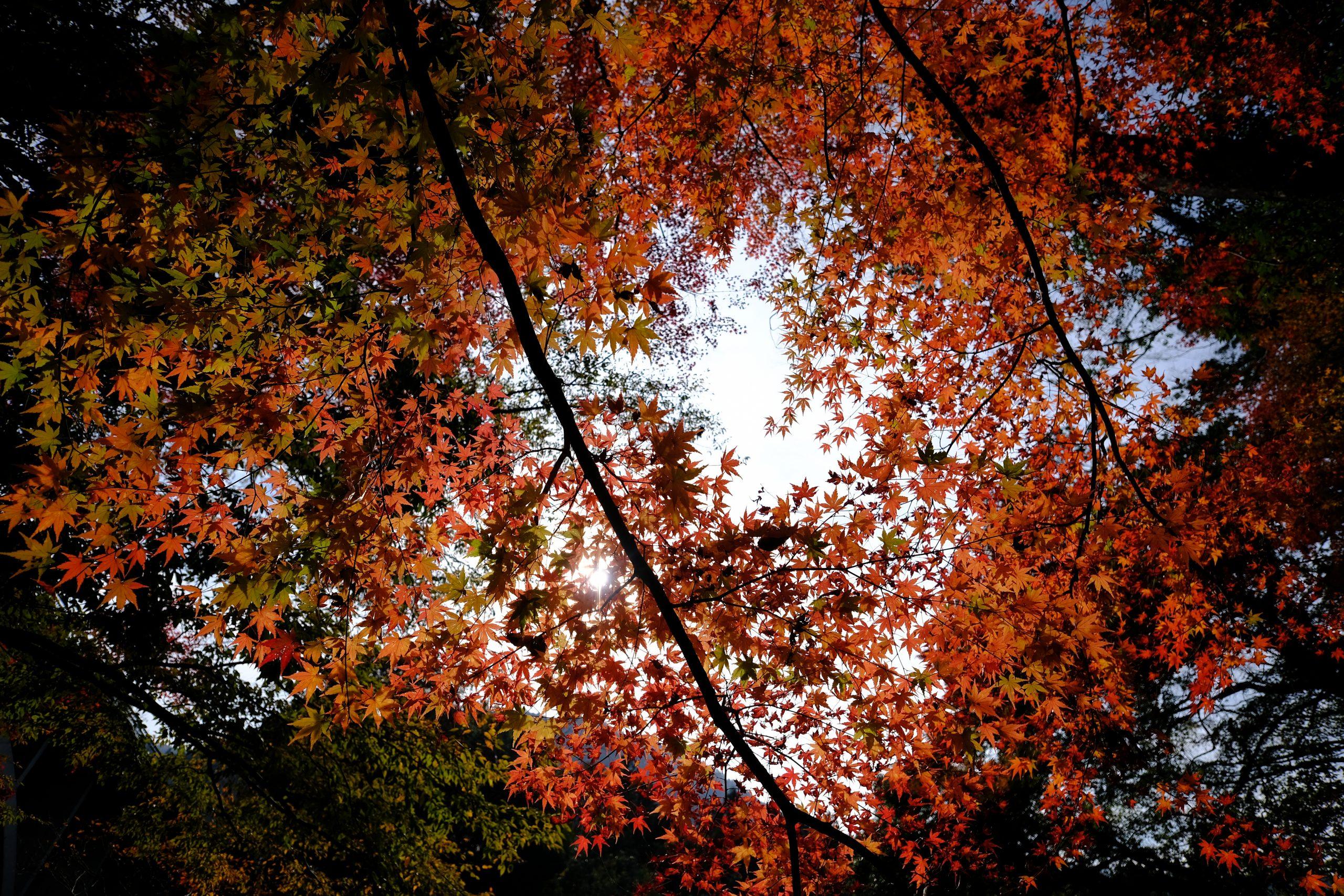 【秋、色撮りどり】Touit12mmの世界【FUJIFILM】