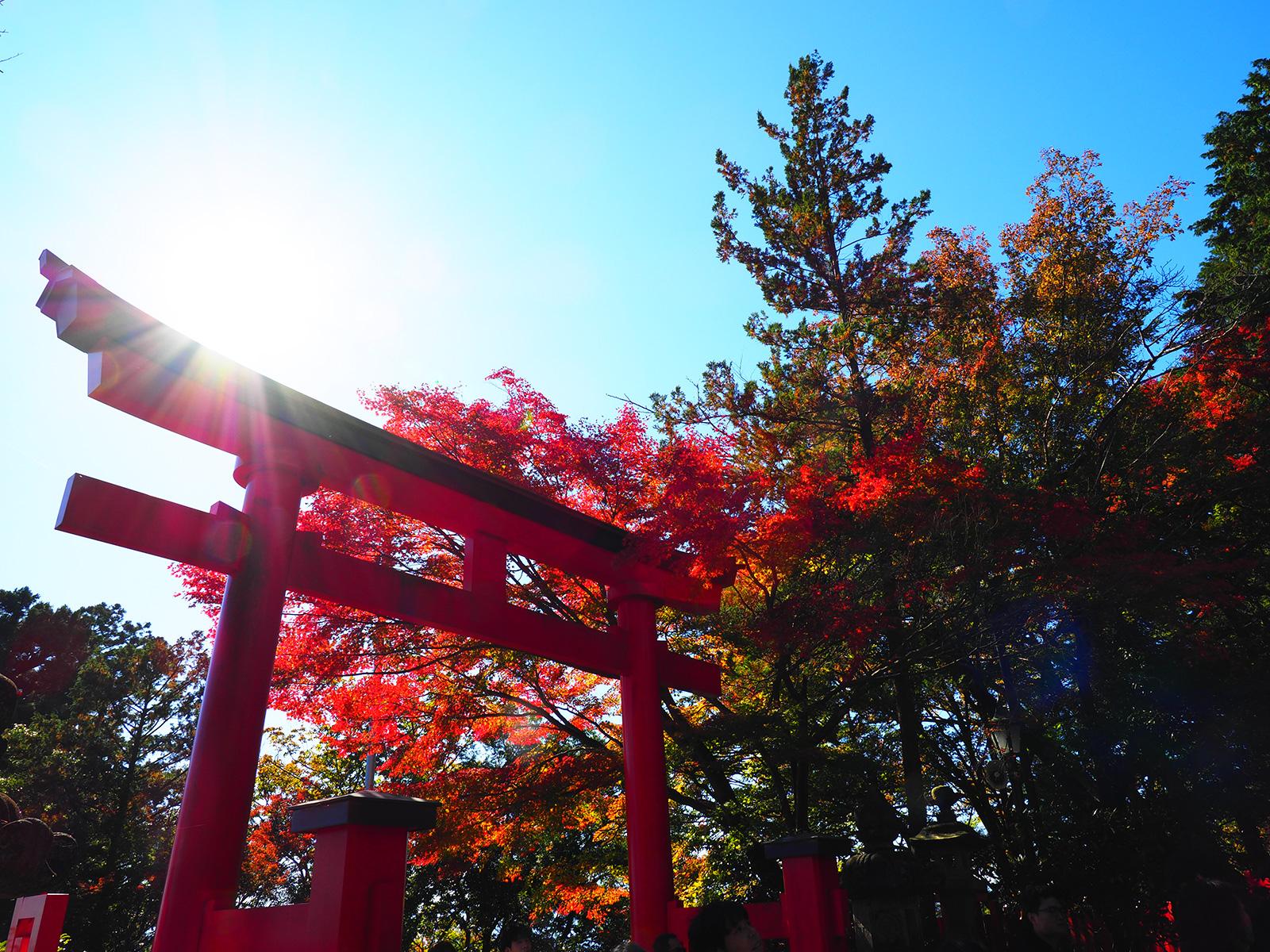 【秋、色撮りどり】色鮮やかな世界