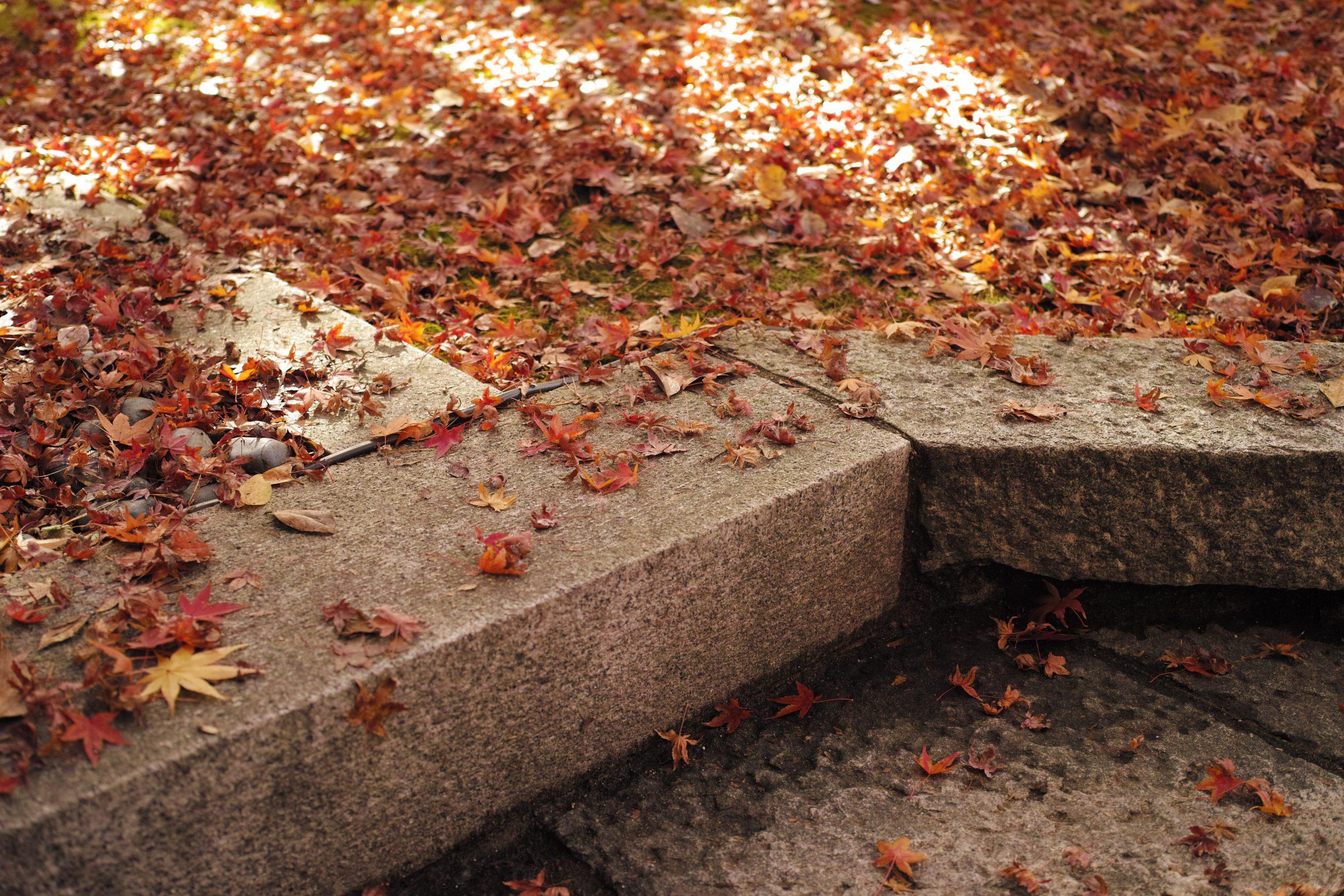 【秋、色撮りどり】今日もMerrillといっしょ