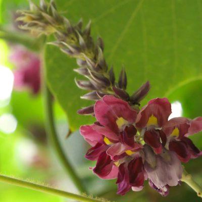 【秋を感じて】秋の七草 その3 最終回 この季節に咲く花(9)