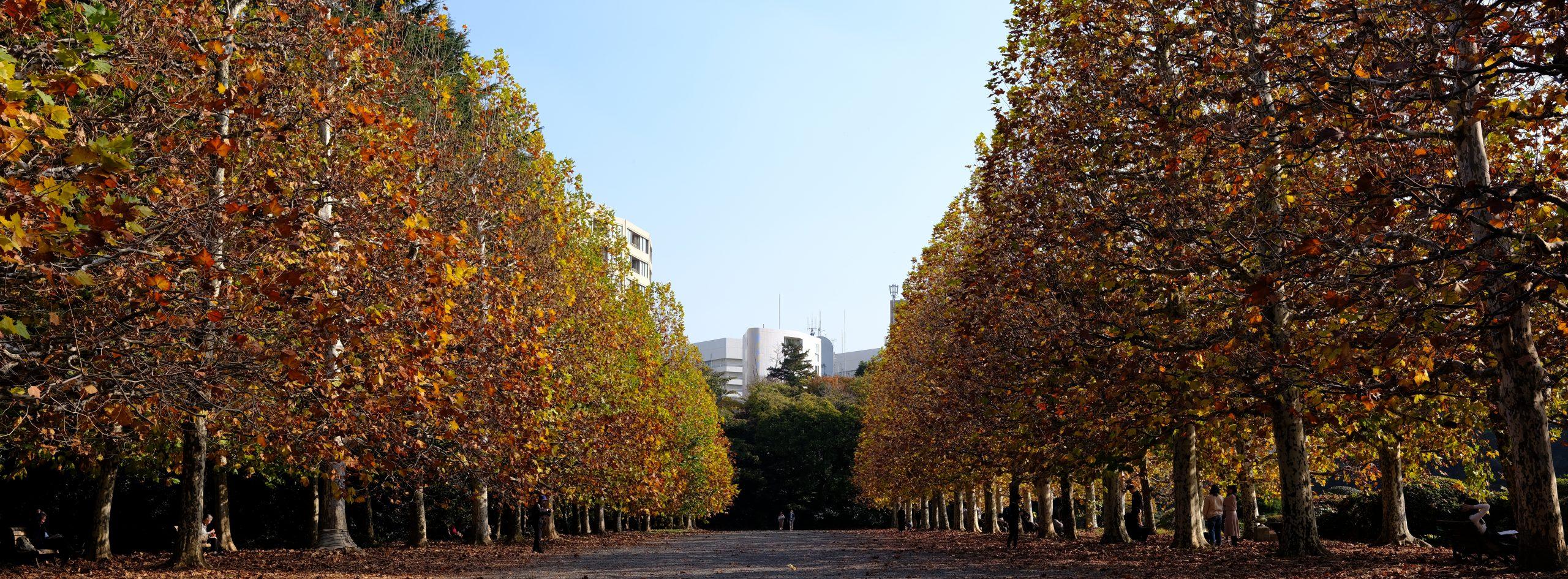【秋、色撮りどり】FUJIFILM GFX 50Rに思いを馳せる