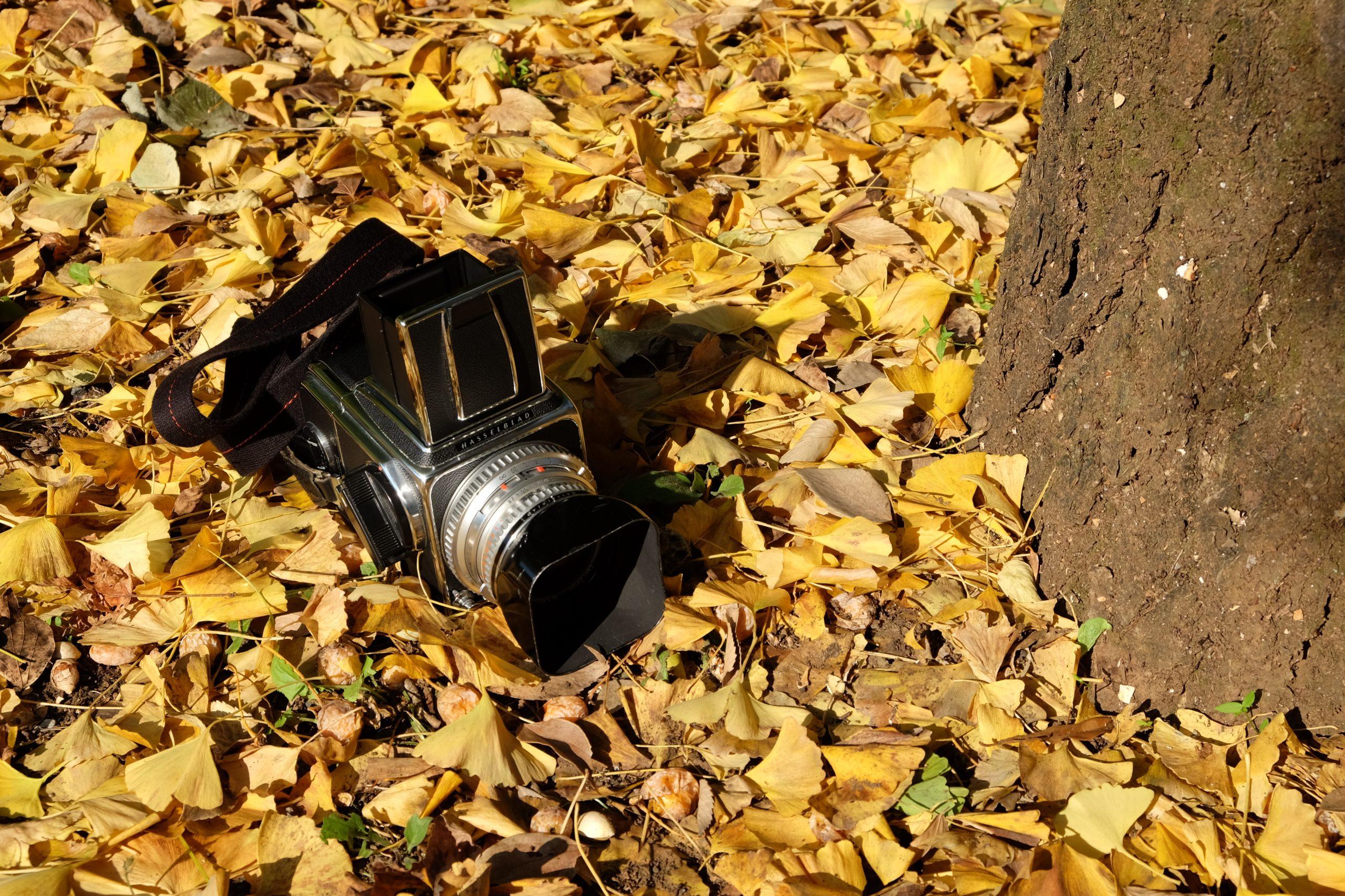 【秋、色撮りどり】フィルム散歩 ~HASSELBLADで刻む秋~