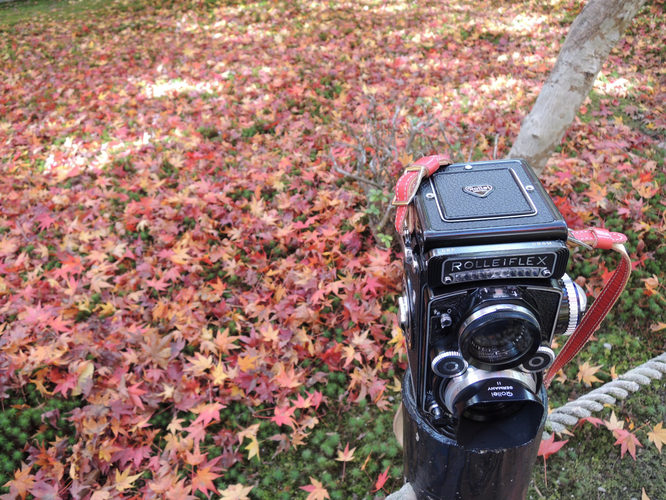 【秋、色撮りどり】Rolleiflexで刻む秋