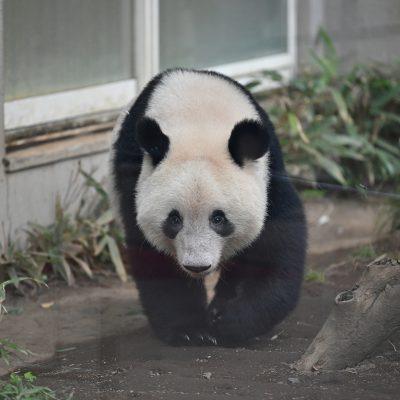 【Nikon】Z7で撮影した思い出の動物園