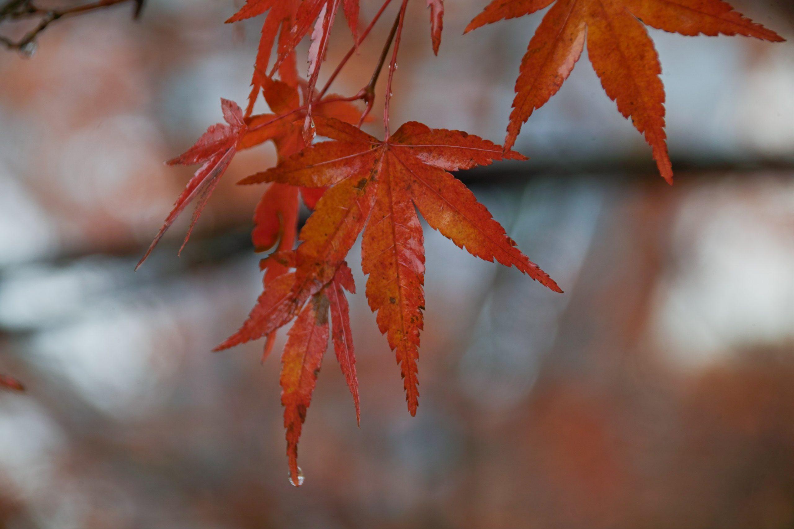 【秋、色撮りどり】FOVEONで撮る秋の空気