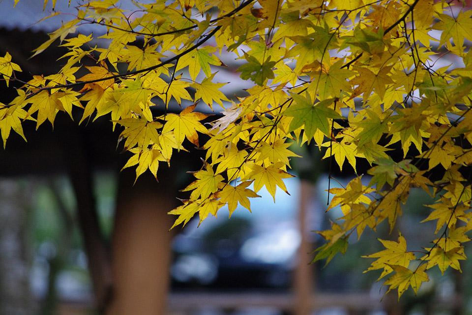 【秋、色撮りどり】PENTAX K-7と行く紅葉狩り