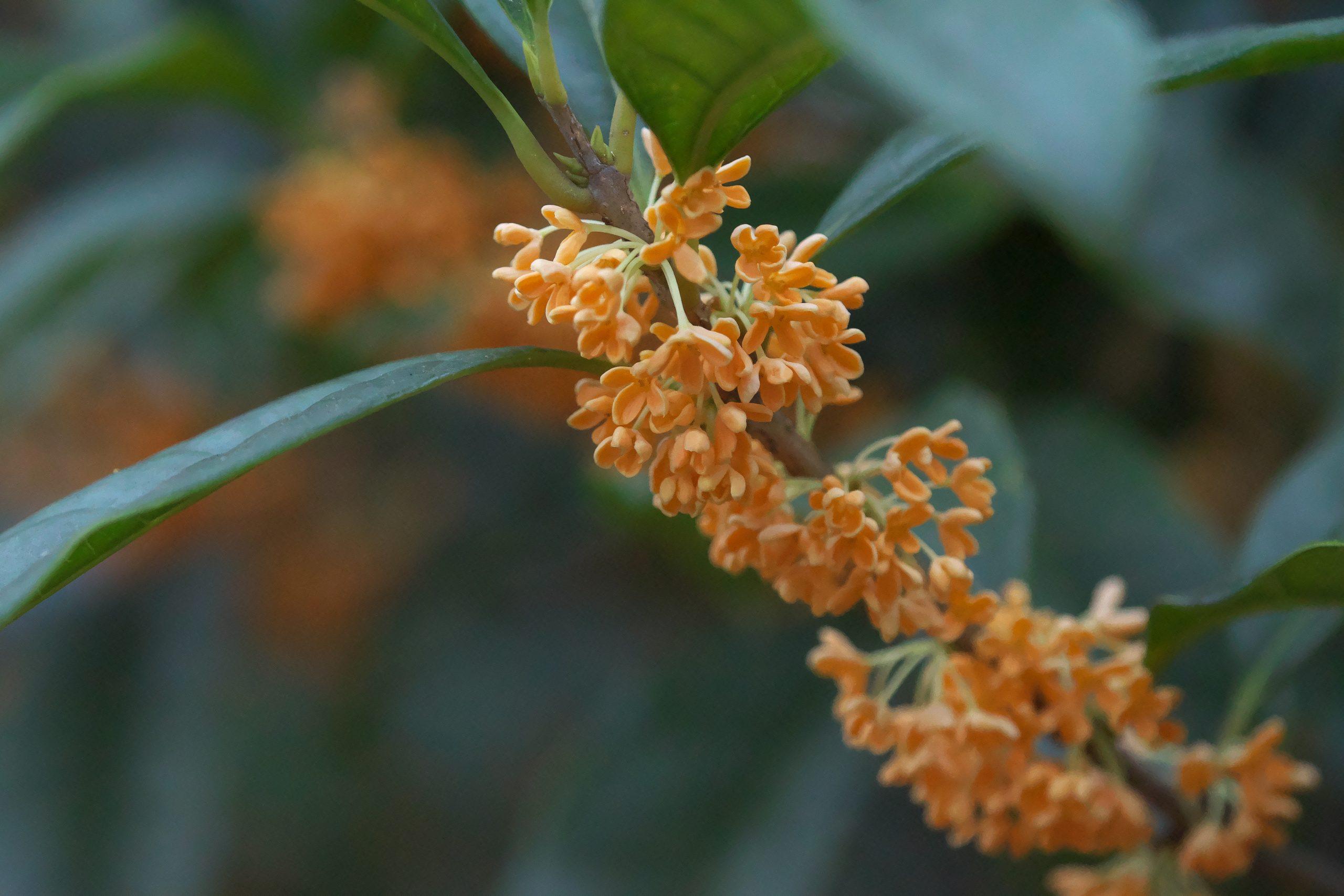 【SONY】この季節に咲く花(10)