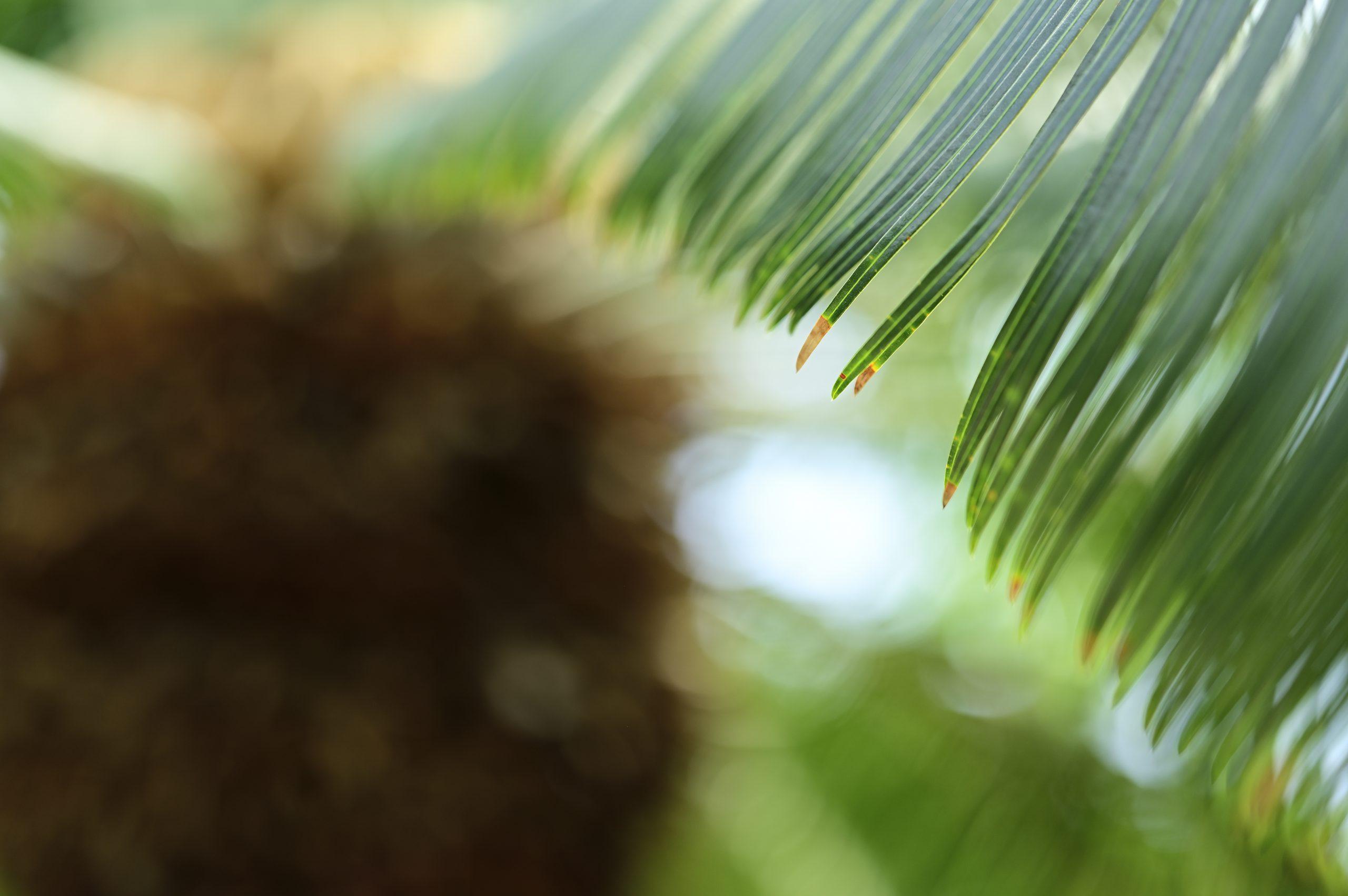 【Nikon】Z6×NIKKOR Z 85mm F1.8 Sで植物撮影