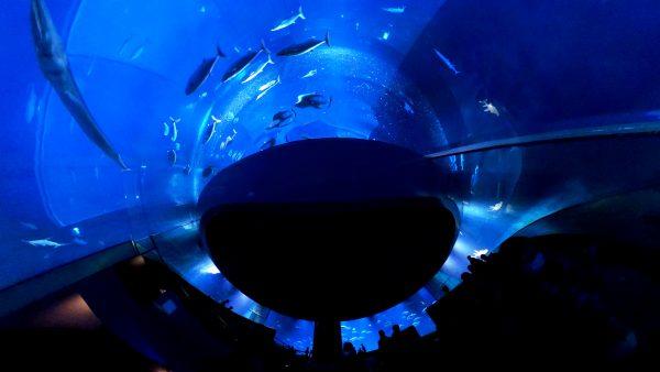【Go To フォト】RICOH THETA Z1で撮る水族園