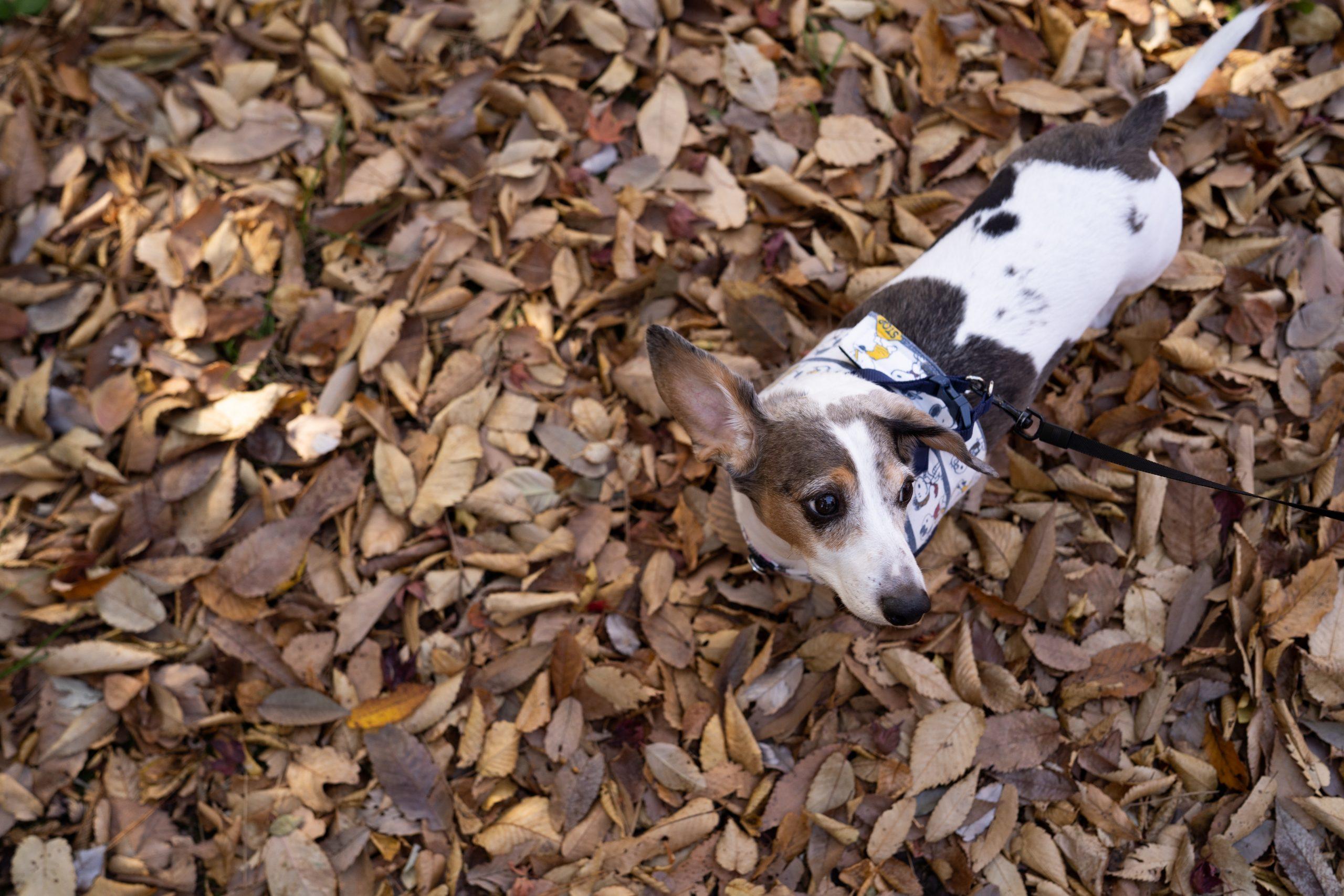 【SONY】カールツァイスと一緒に「紅葉」と「犬散歩」