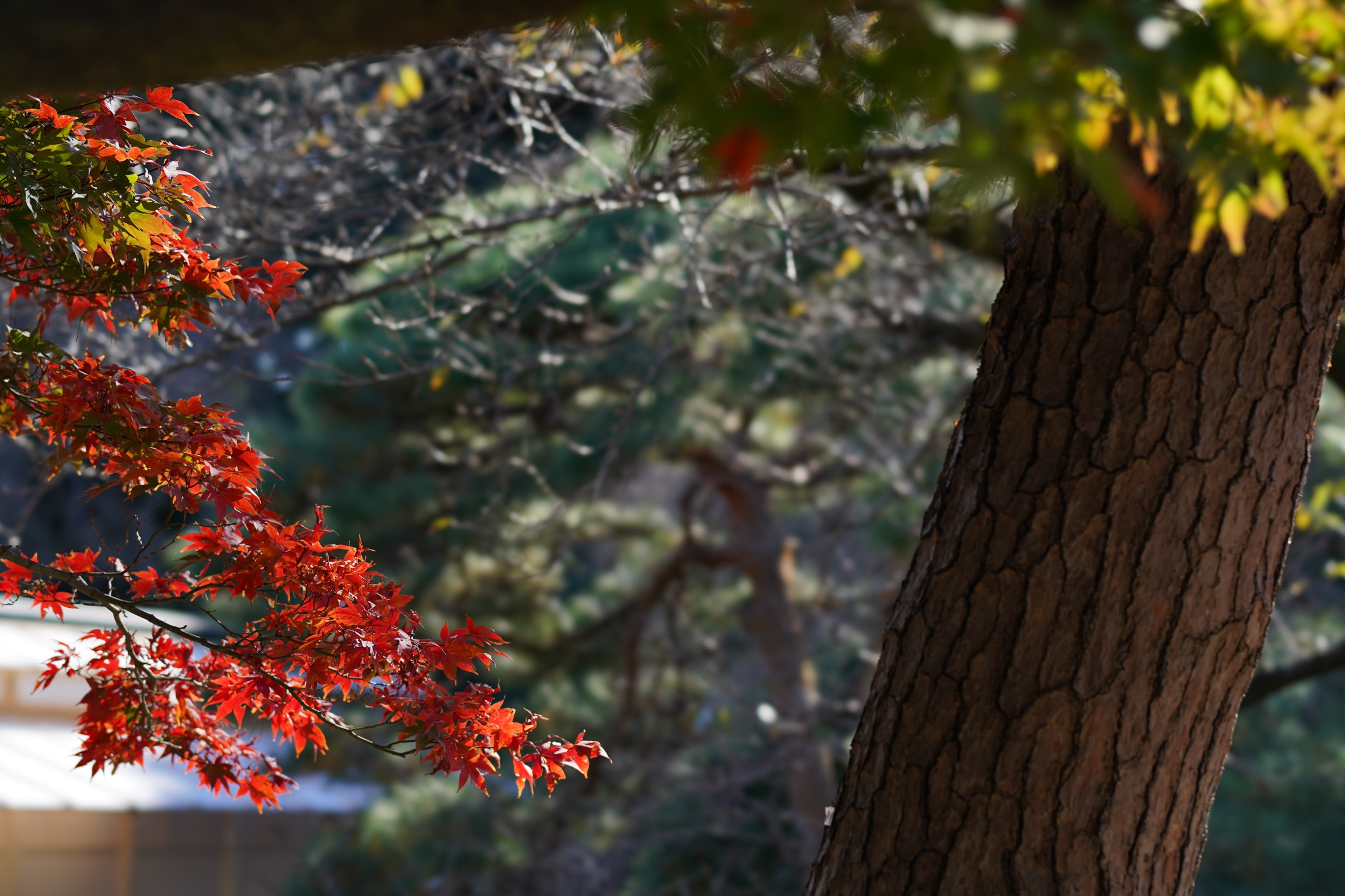 【SONY】中望遠で切り取る風景写真