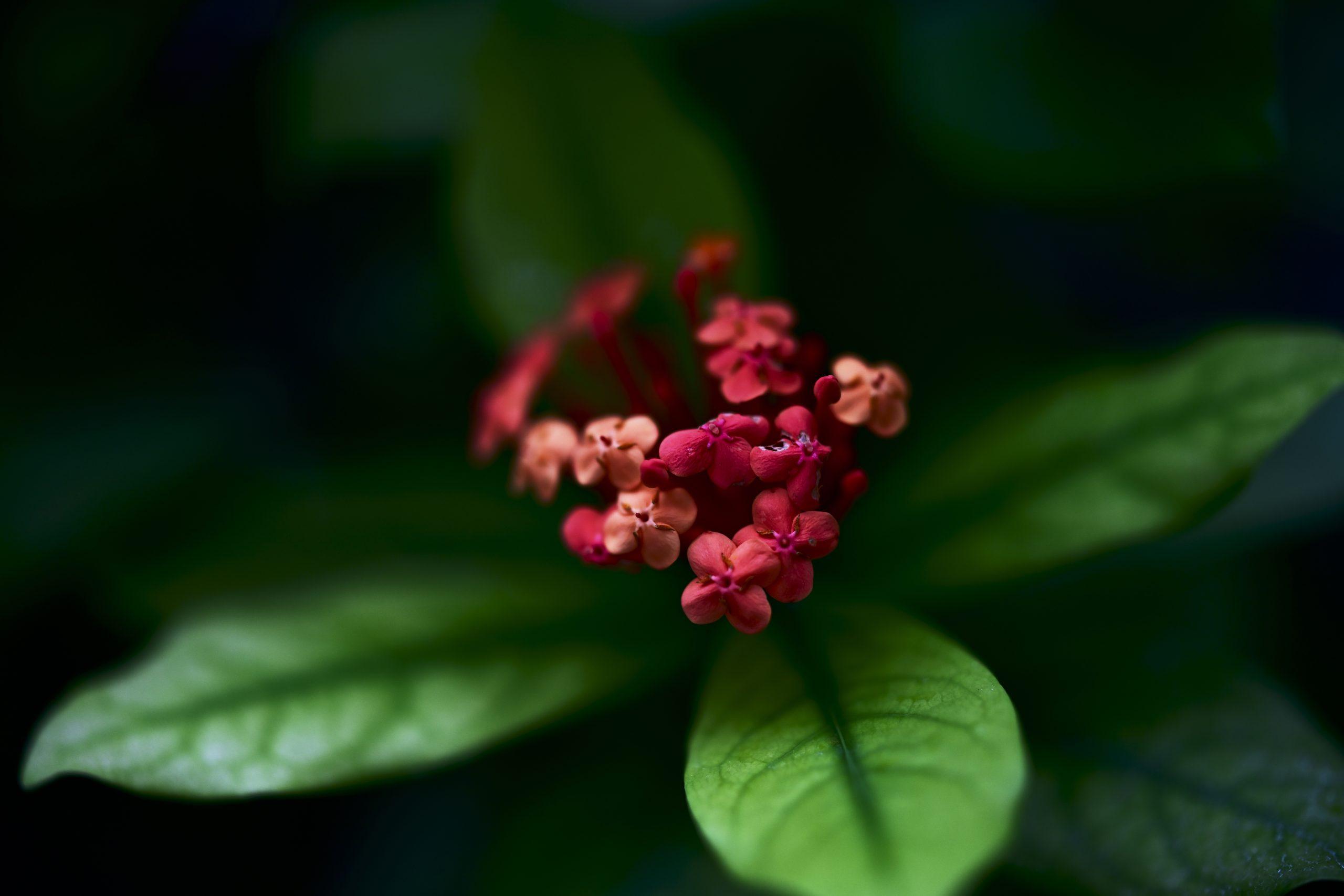 【Nikon】Z7II×Z58mm F0.95 S Noct 魅惑の植物撮影