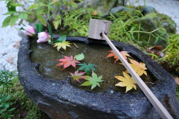 【FUJIFILM】X-S10の手ブレ補正を実験に鎌倉へ行きました。
