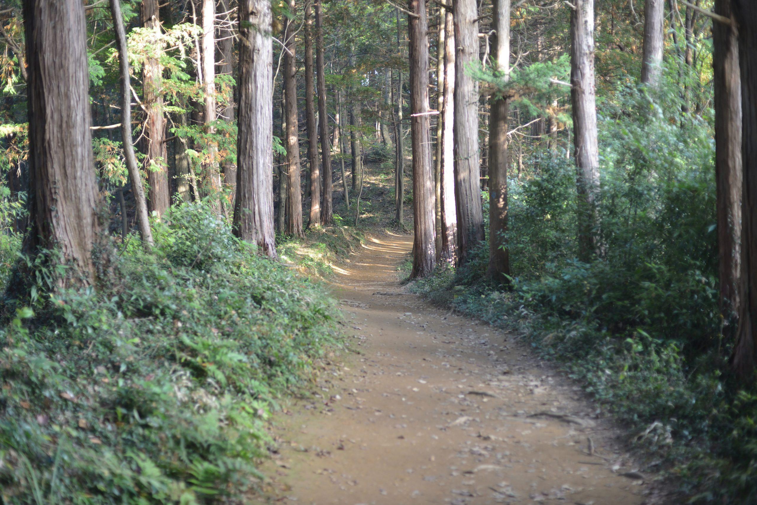 【Go To フォト】Nikonの望遠レンズで見た秋の景色