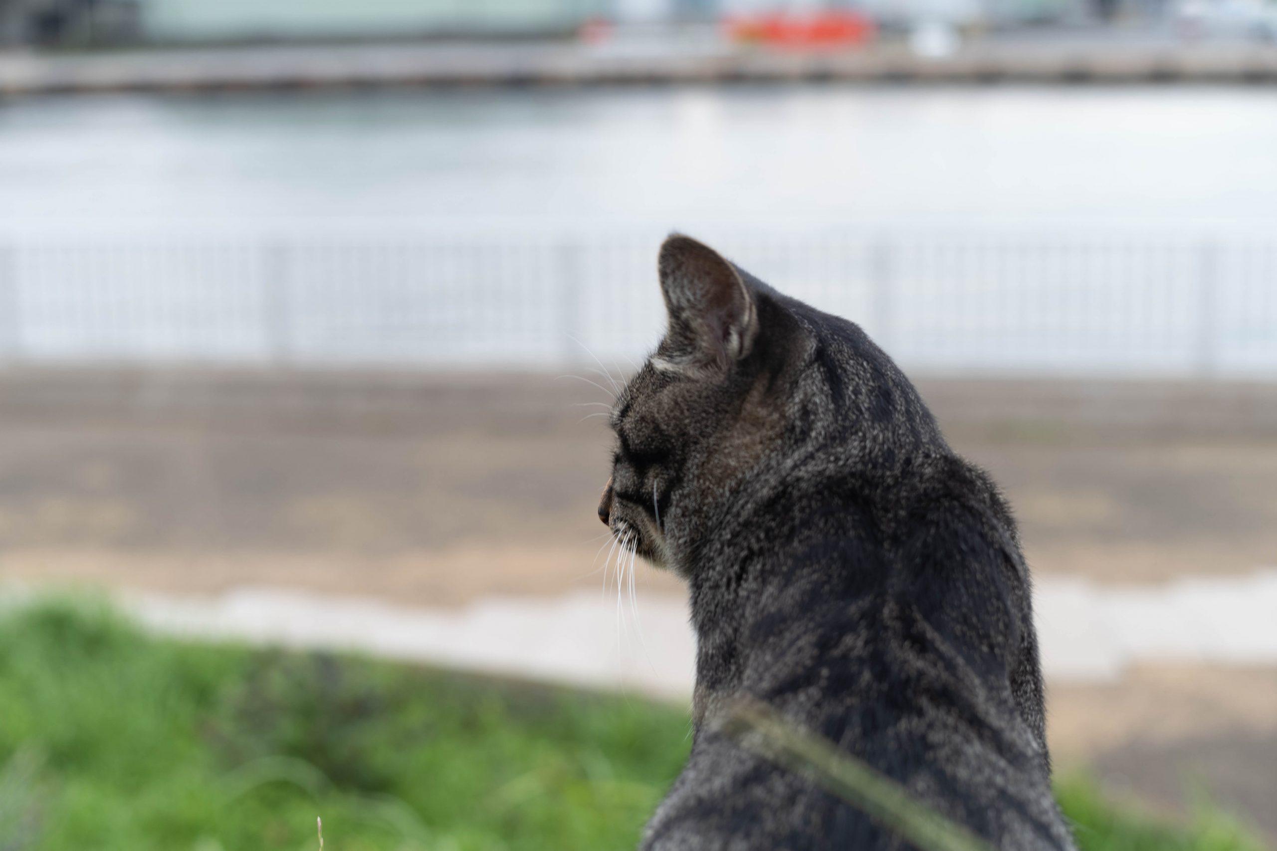 海を見下ろす猫