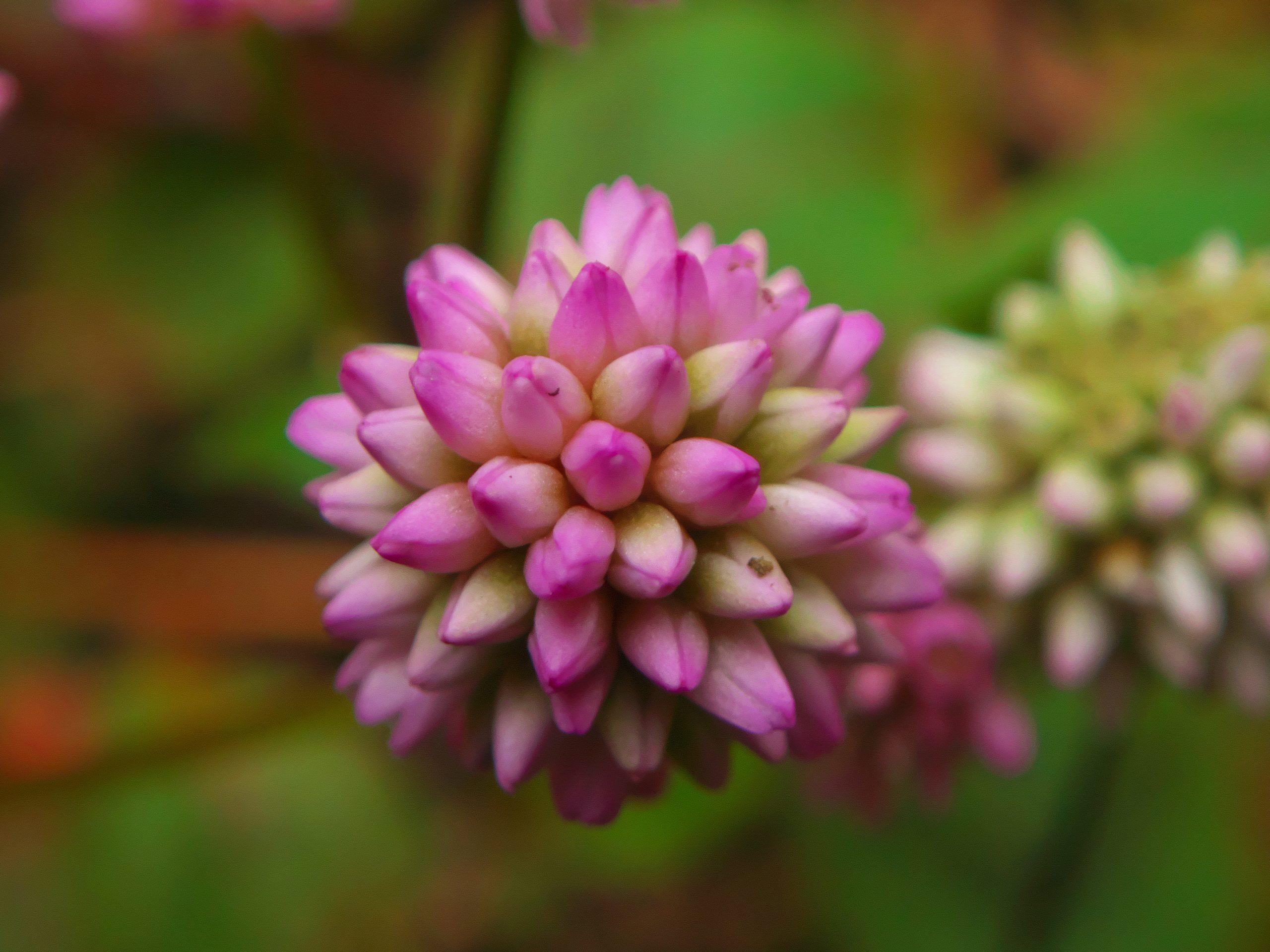【SONY】この季節に咲く花(12)
