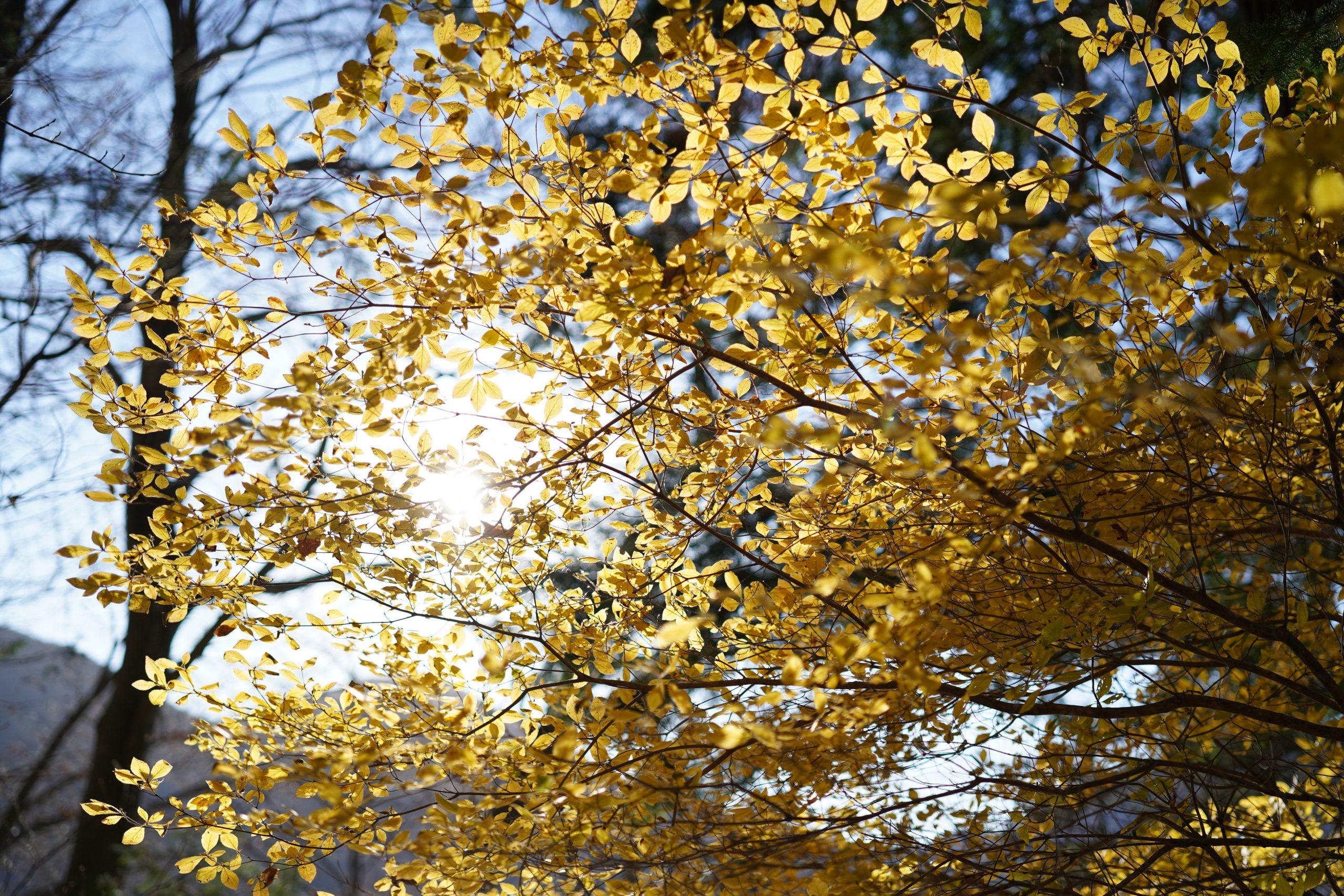 【SONY】秋の終わり