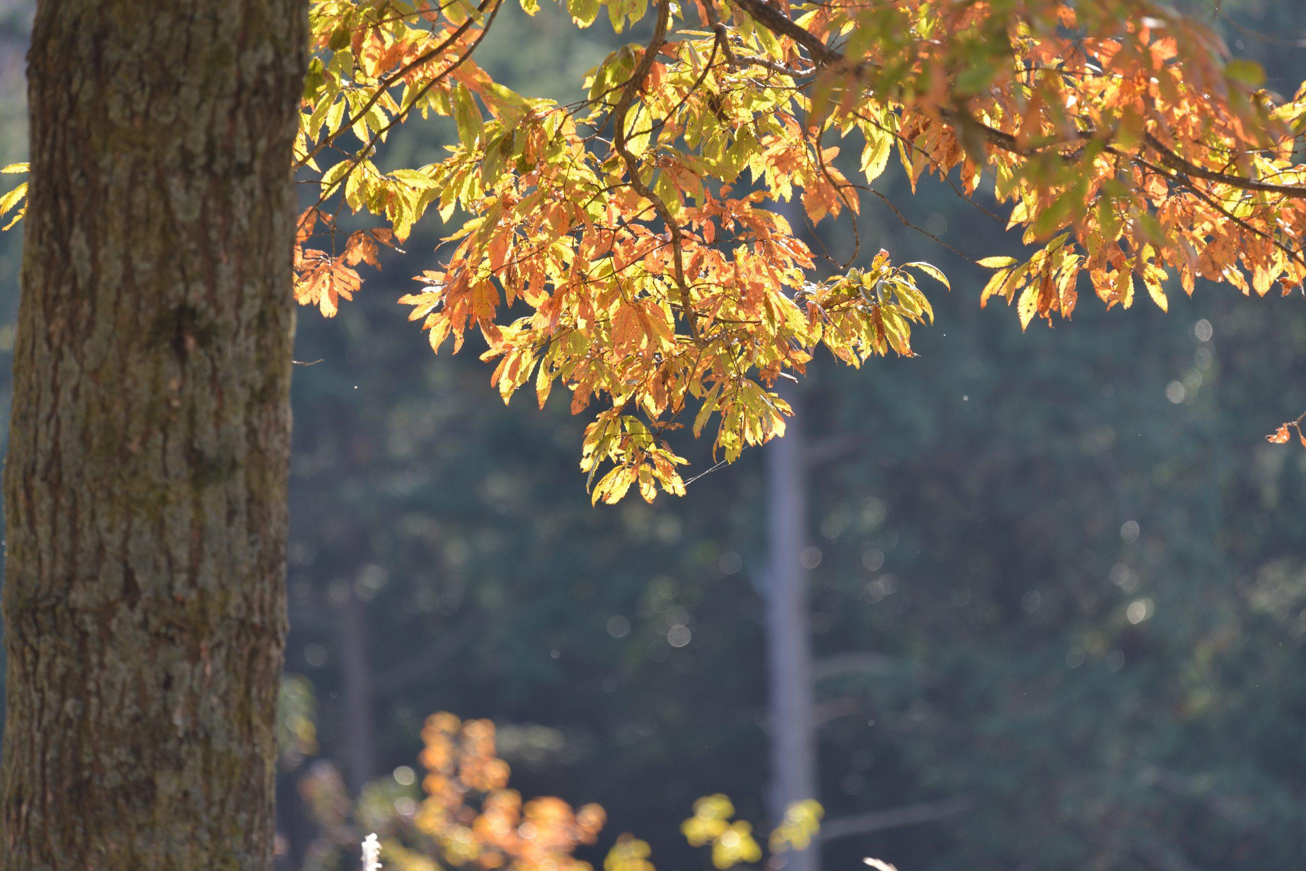 【Nikon】望遠レンズで見た12月の風景