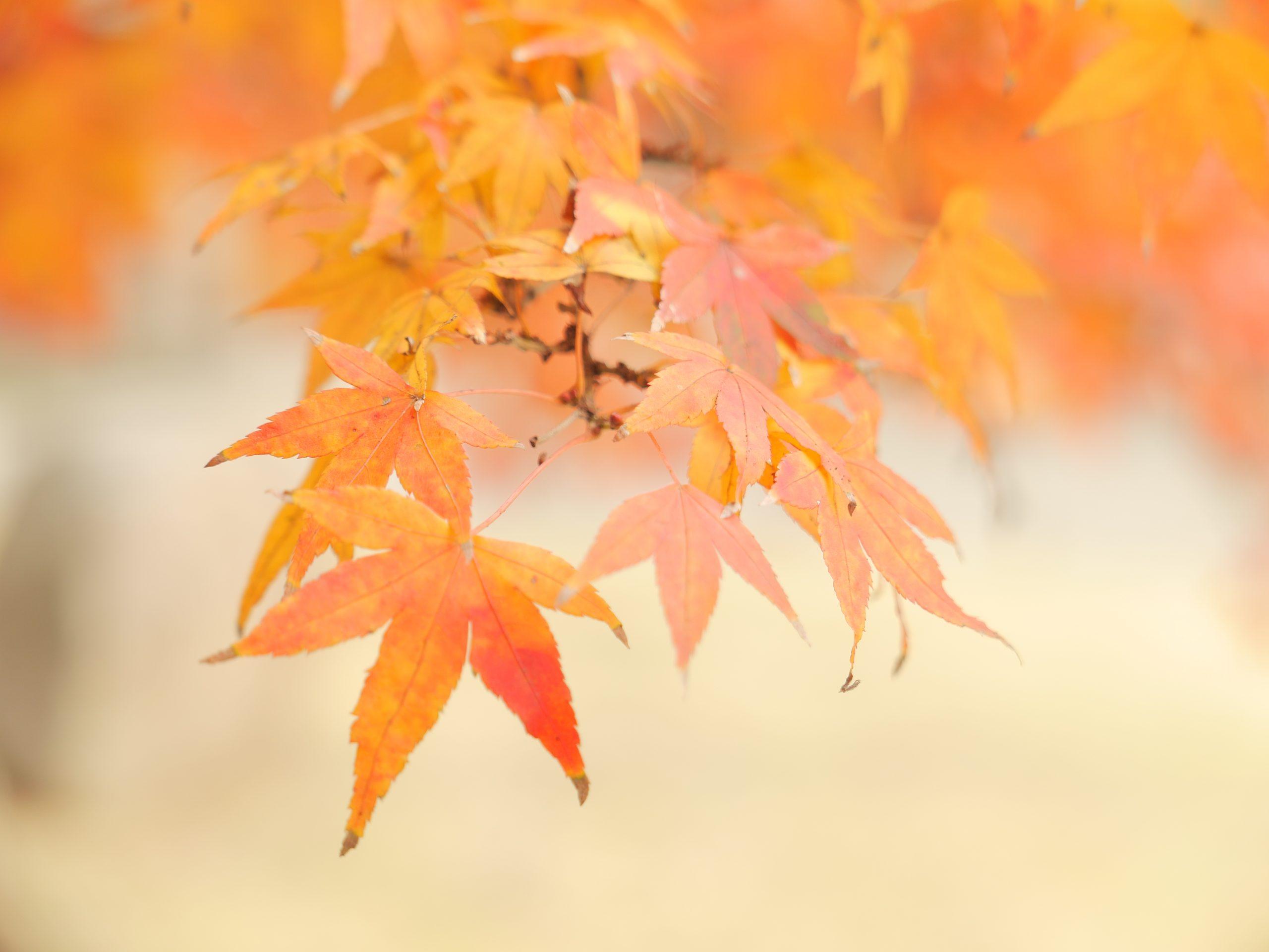【Panasonic】大晦日に振り替える晩秋の時