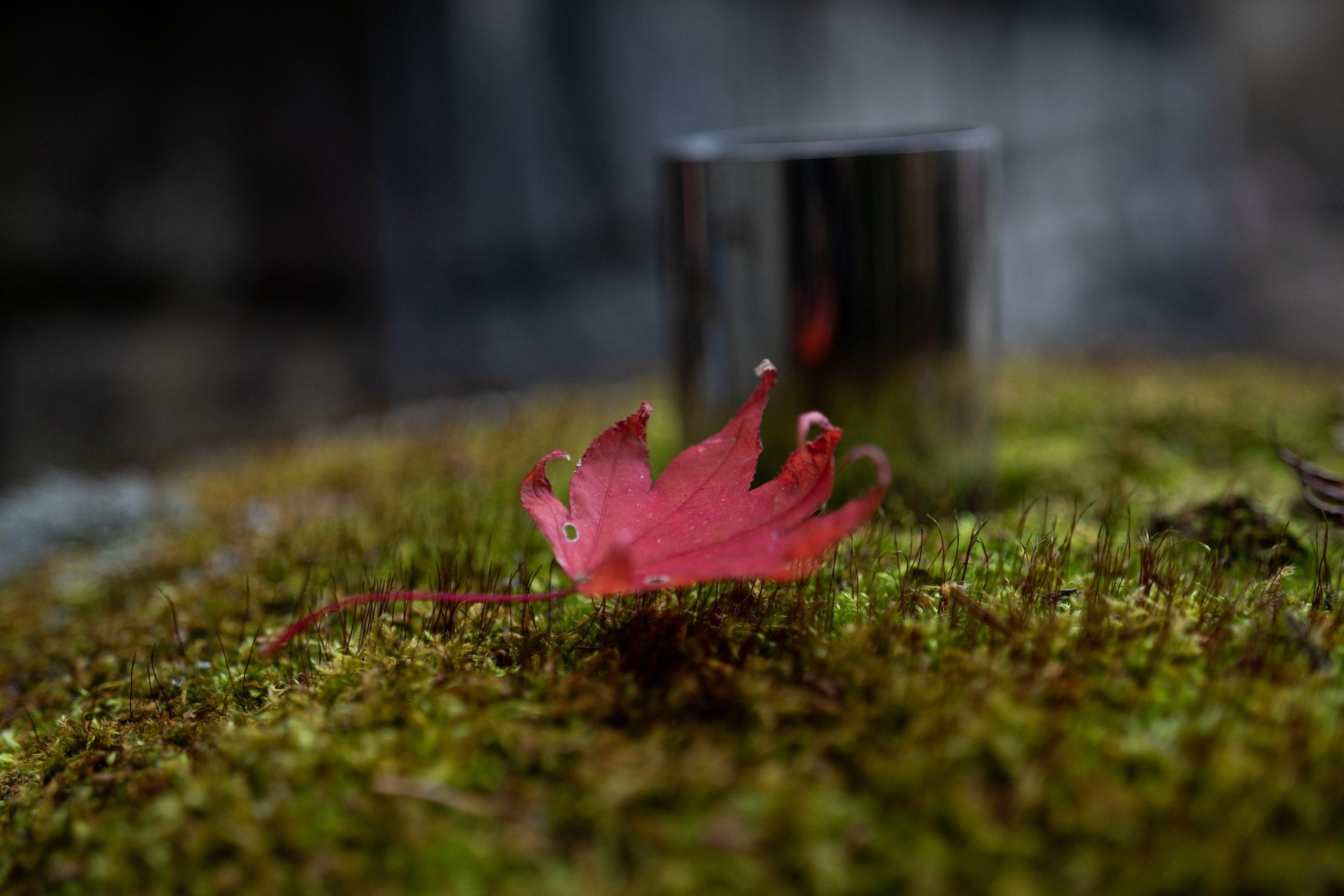 【SONY】秋の大山 Batisと紅葉散策