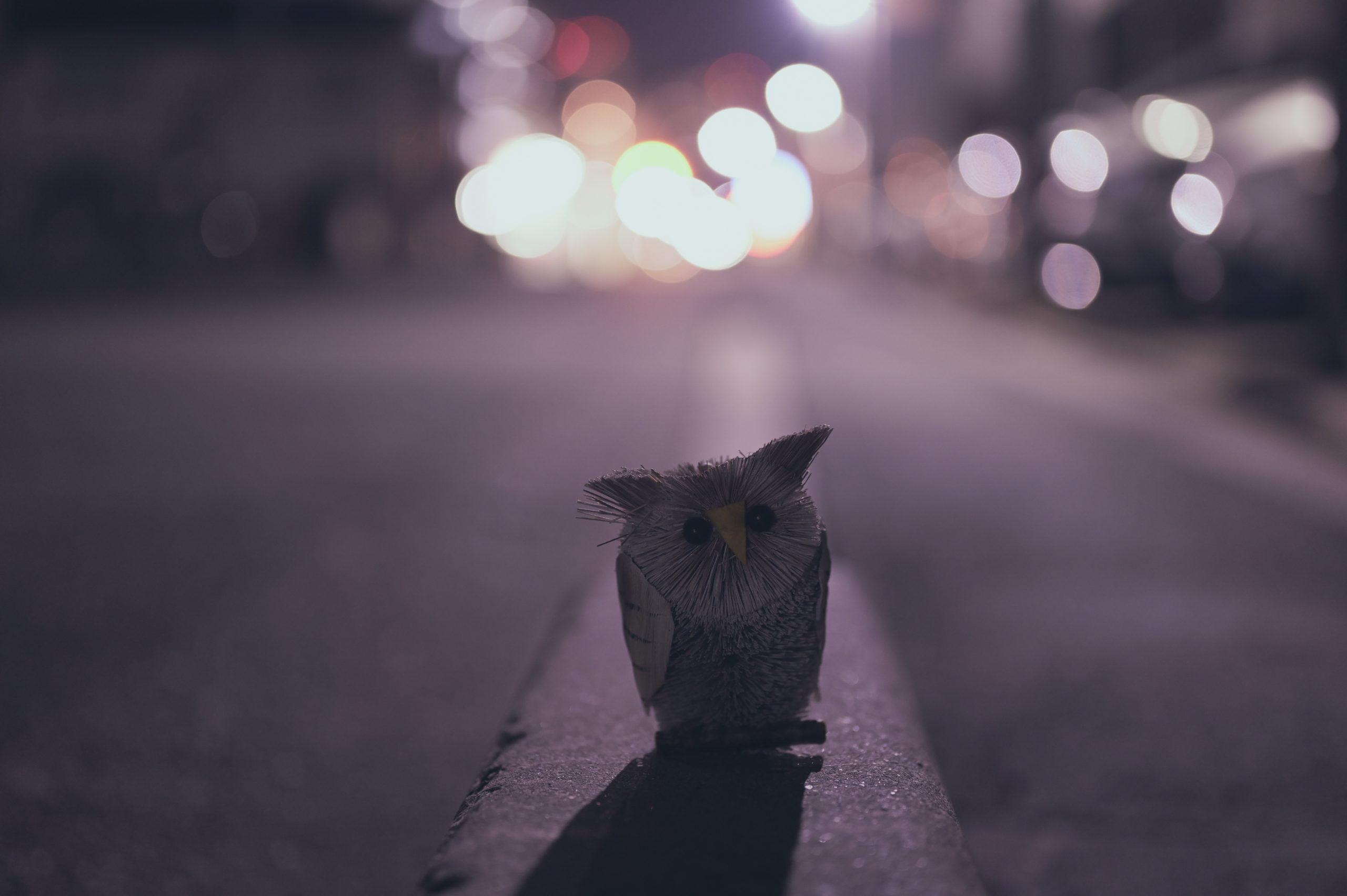 【Nikon】真夜中の物撮り×Z6