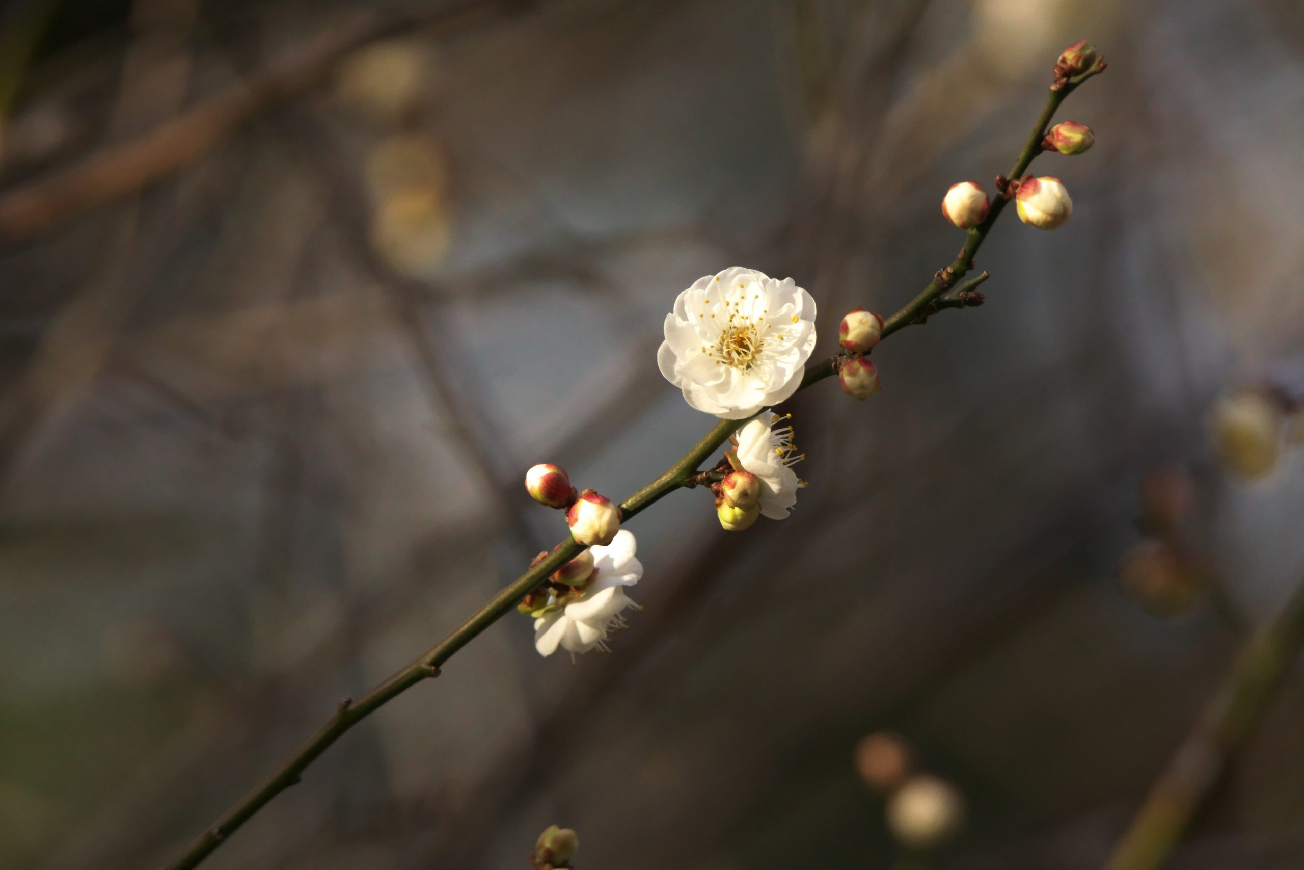 【SONY】この季節に咲く花(16)