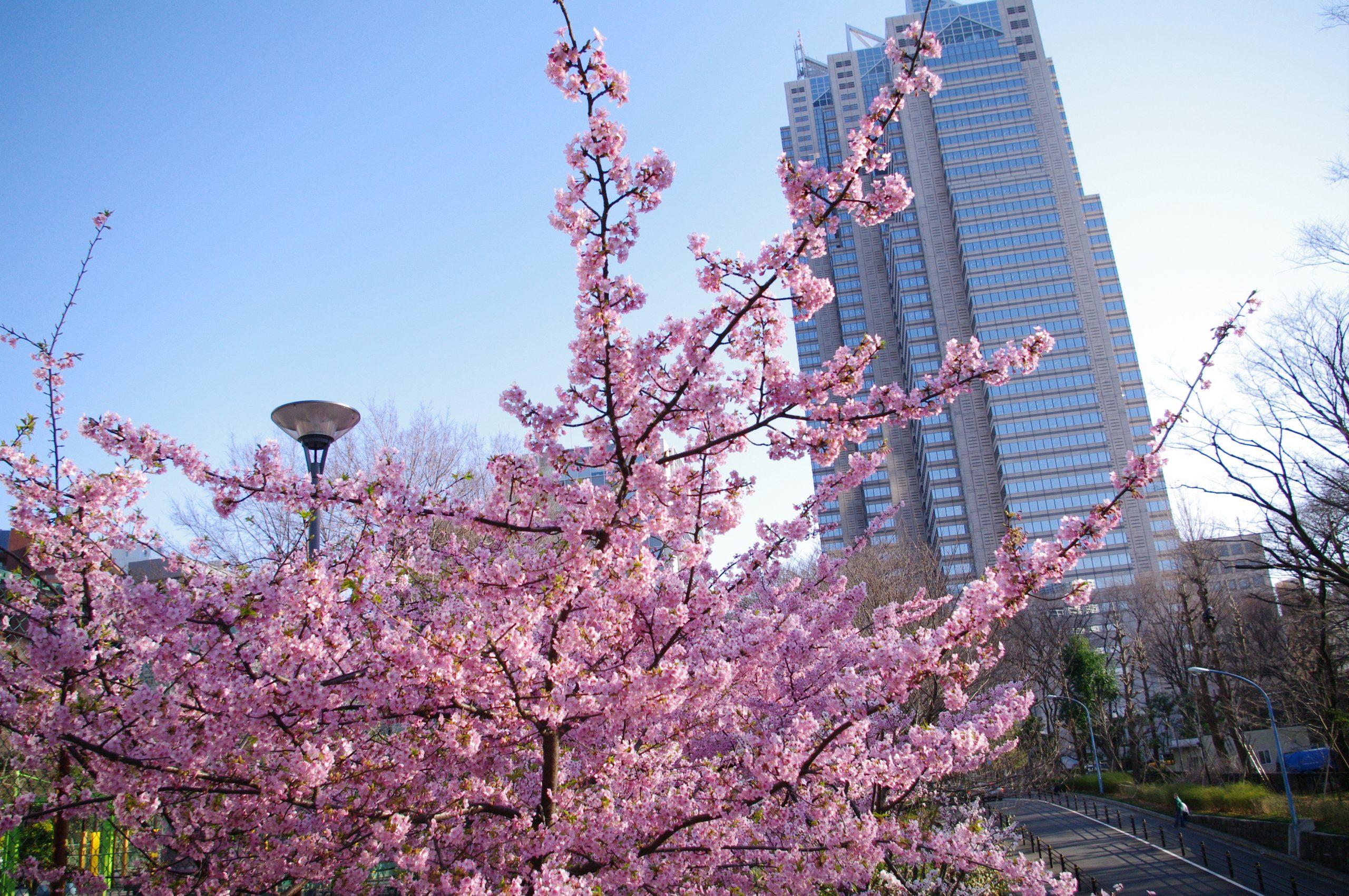 【PENTAX】愛機と行く新宿中央公園