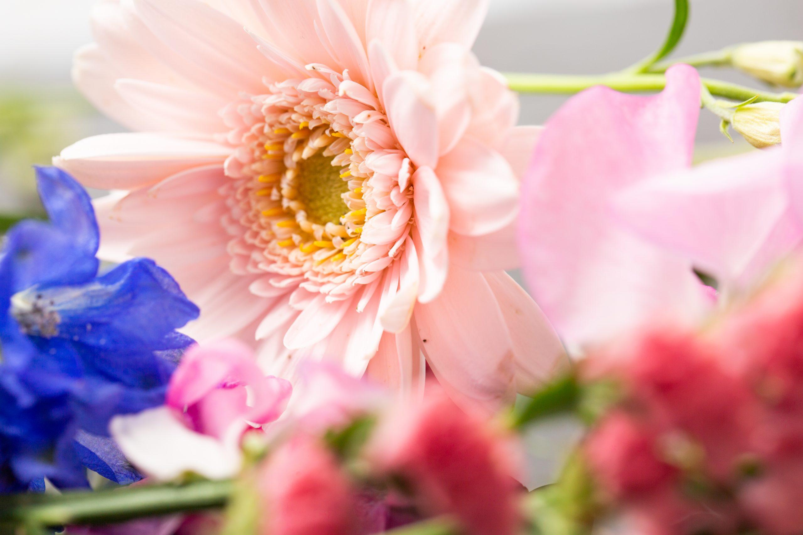 【Canon】マクロレンズと洋花