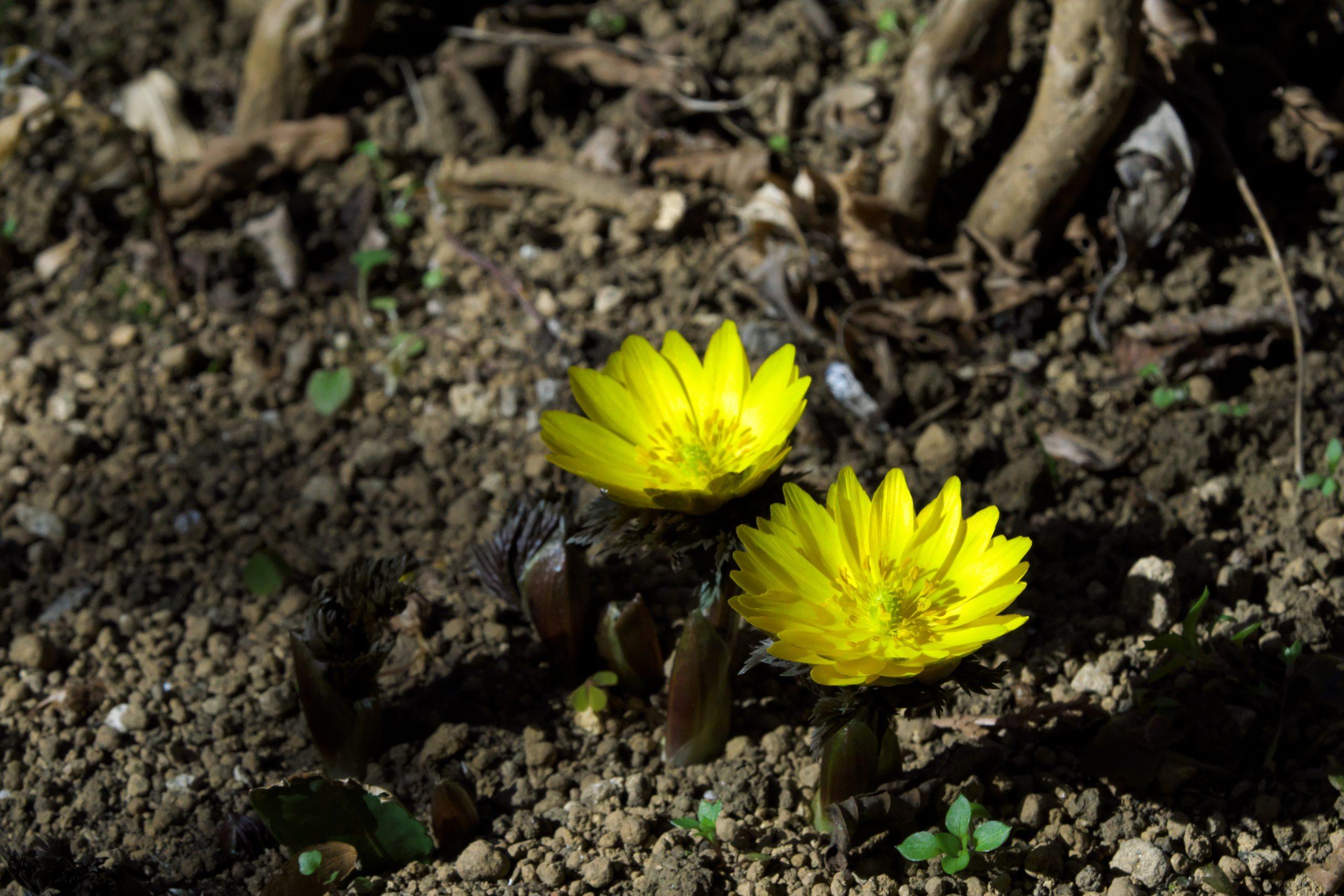 【SONY】この季節に咲く花(19)