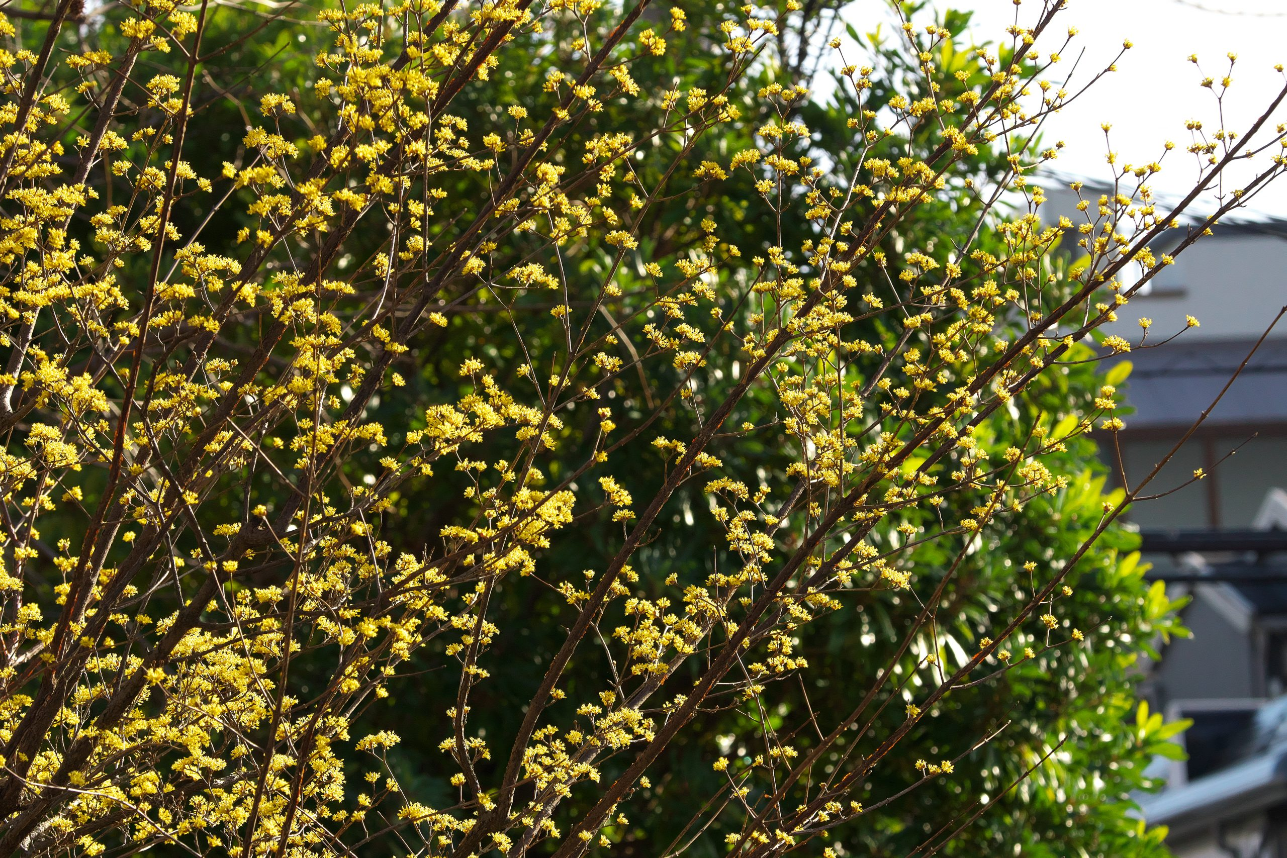 【SONY】この季節に咲く花(21)