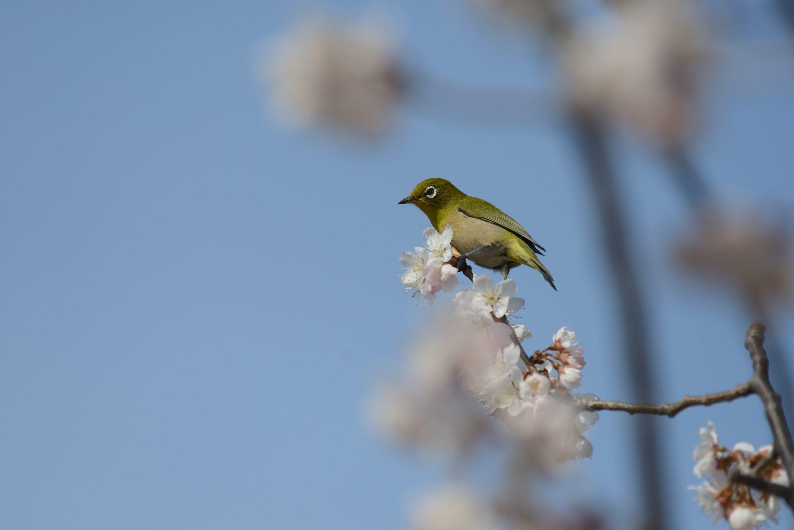 【Nikon】春の訪れ~望遠スナップ