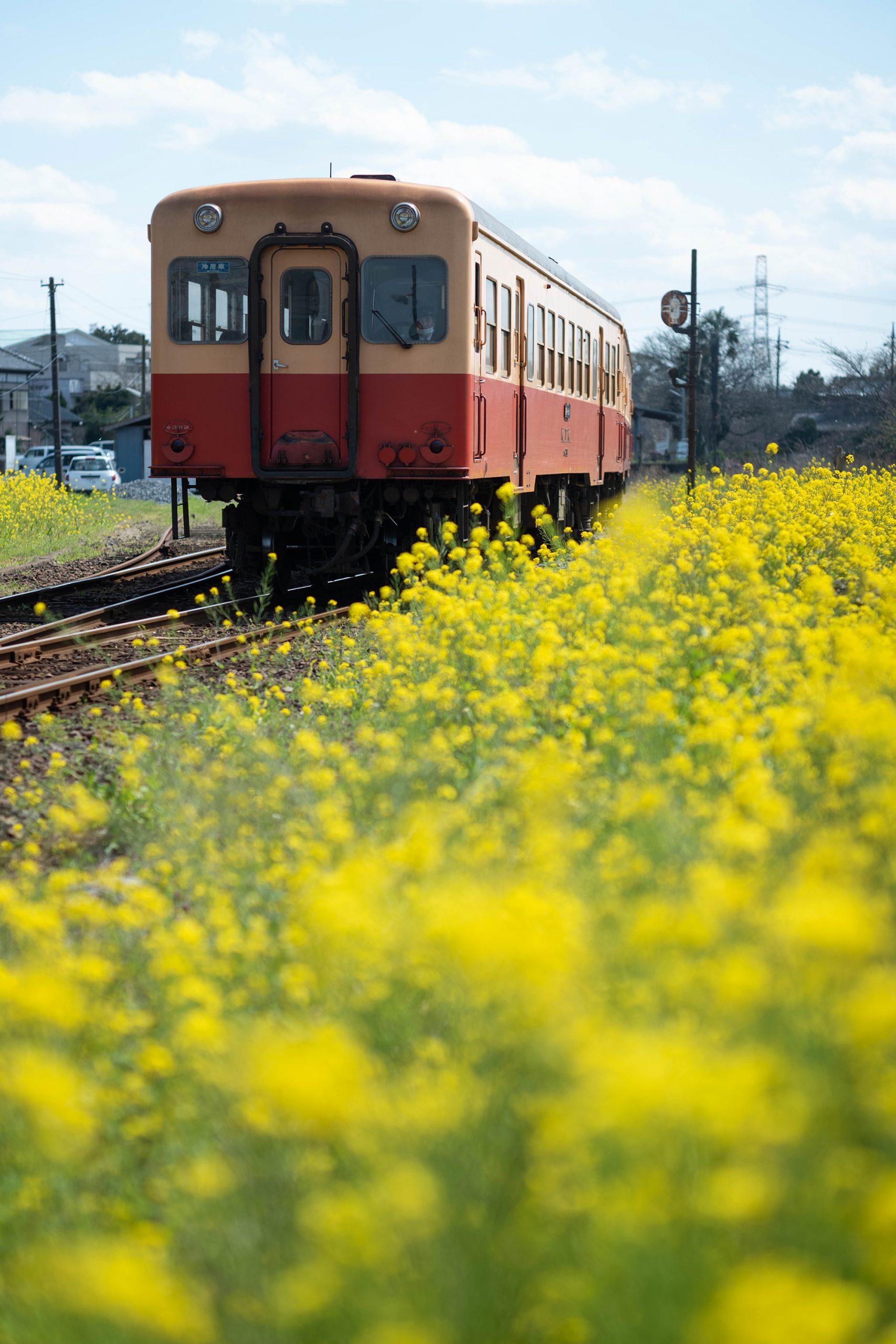 馬立駅の菜の花