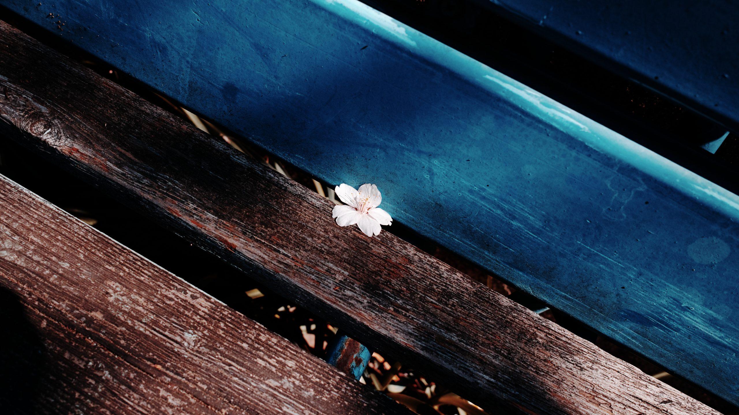 【SIGMA】桜とdp1 Quattro。