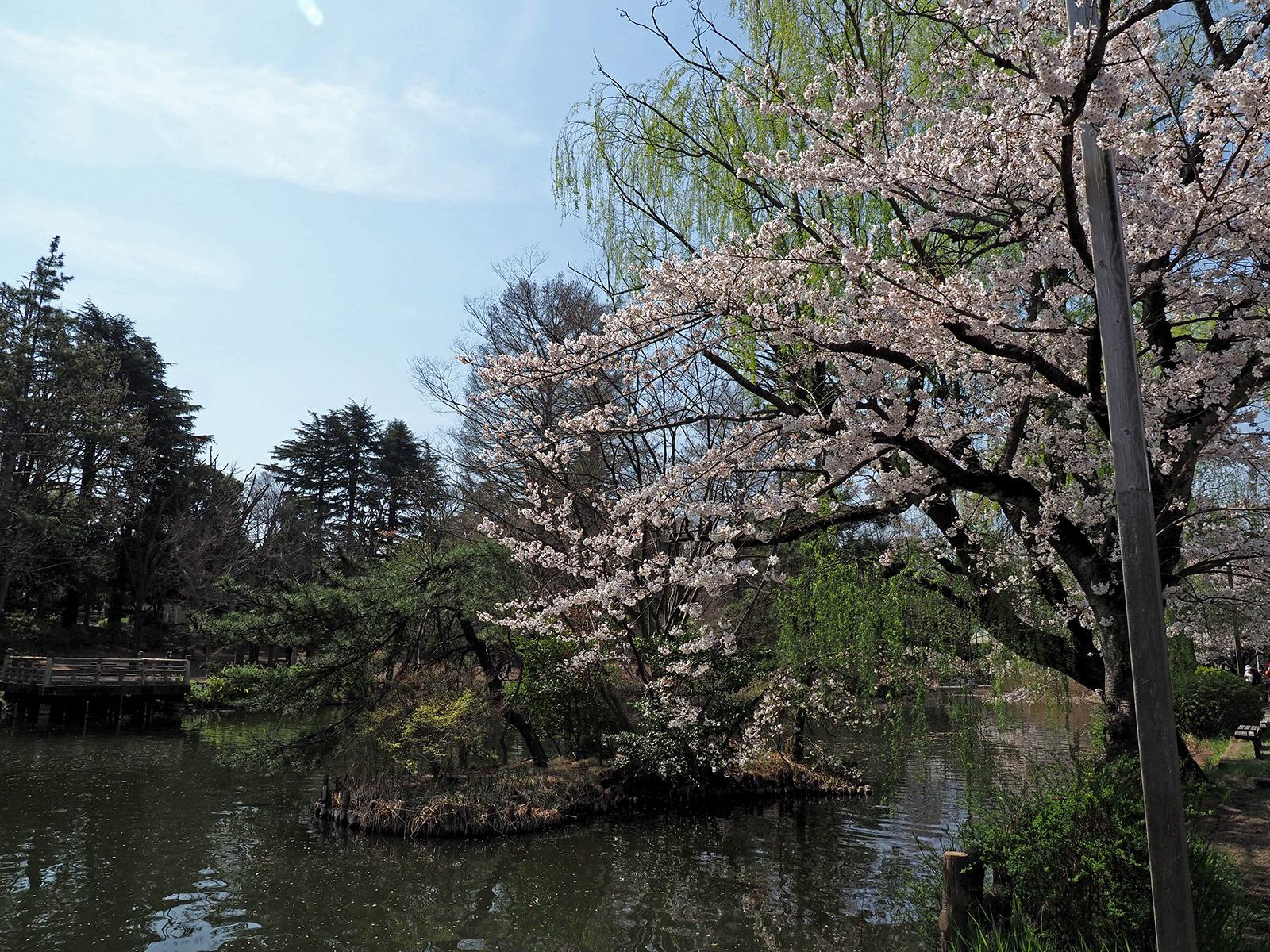 【OLYMPUS】OM-D E-M1 Mark IIで撮り歩き in 石神井公園~桜編