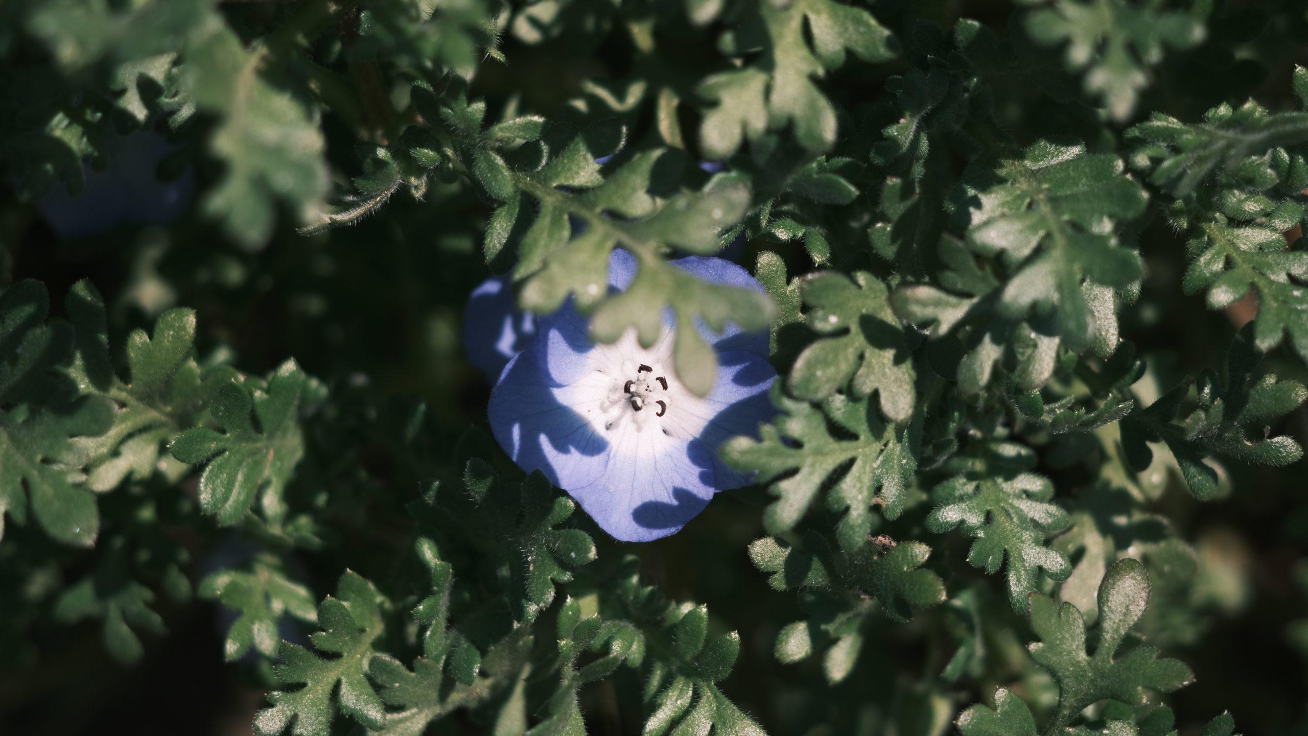 【FUJIFILM】X-E4×フィルムシミュレーションで覗くクラシックレンズの世界 Vol.1
