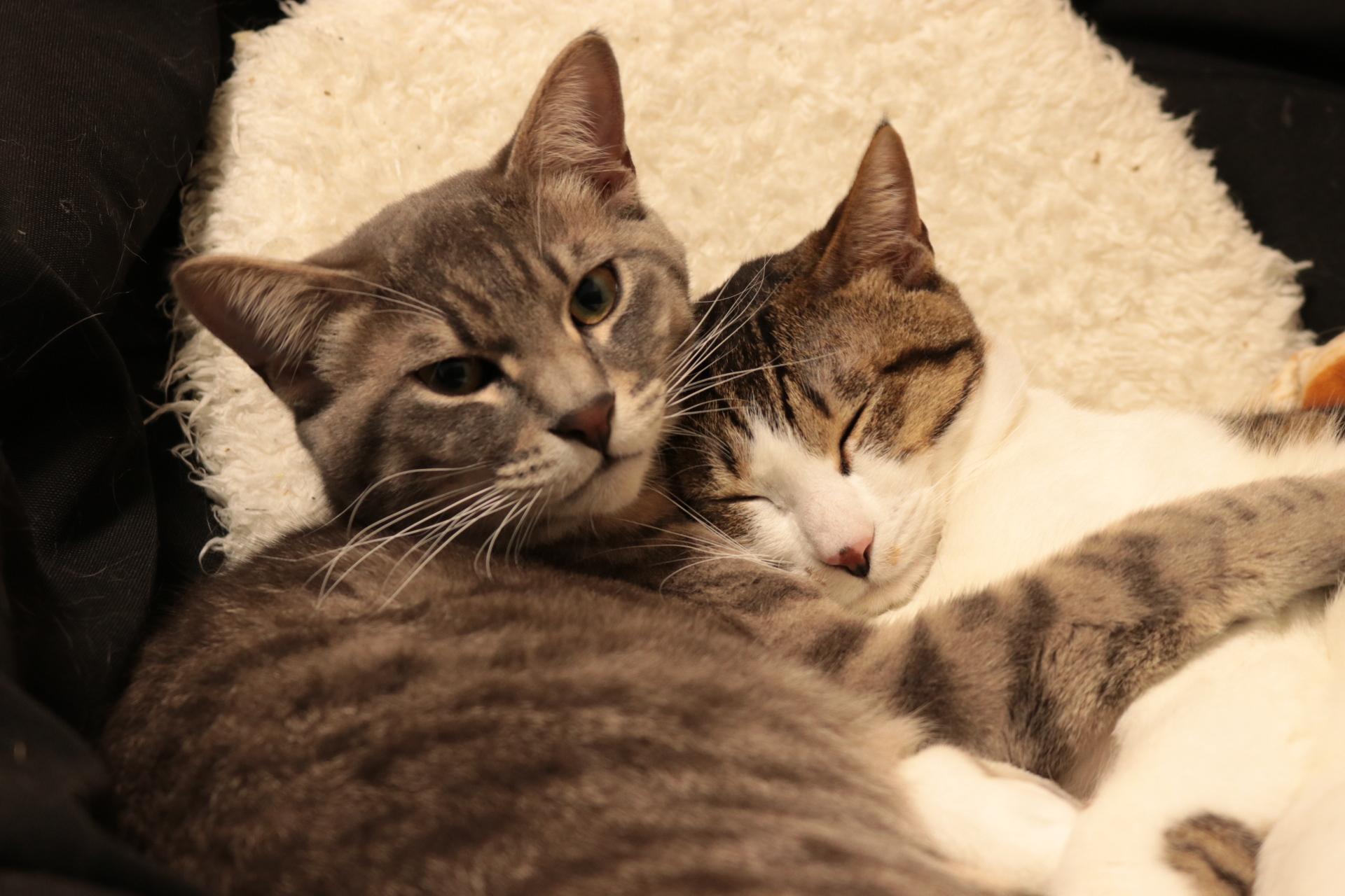 【Canon】EOS 5D Mark IIIで撮影した猫の写真を眺める