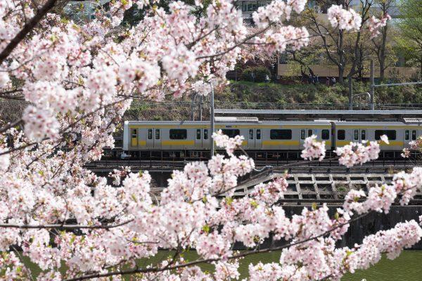 【Leica】車窓から見る桜
