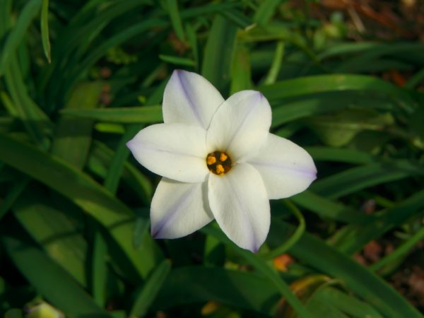 【SONY】この季節に咲く花(24)