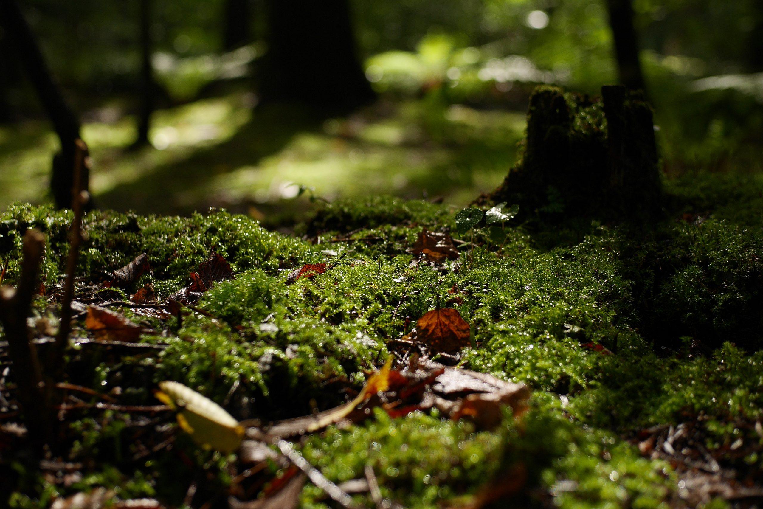 【Panasonic】マイクロフォーサーズで身軽に、秋を感じる軽井沢 草津温泉の旅。