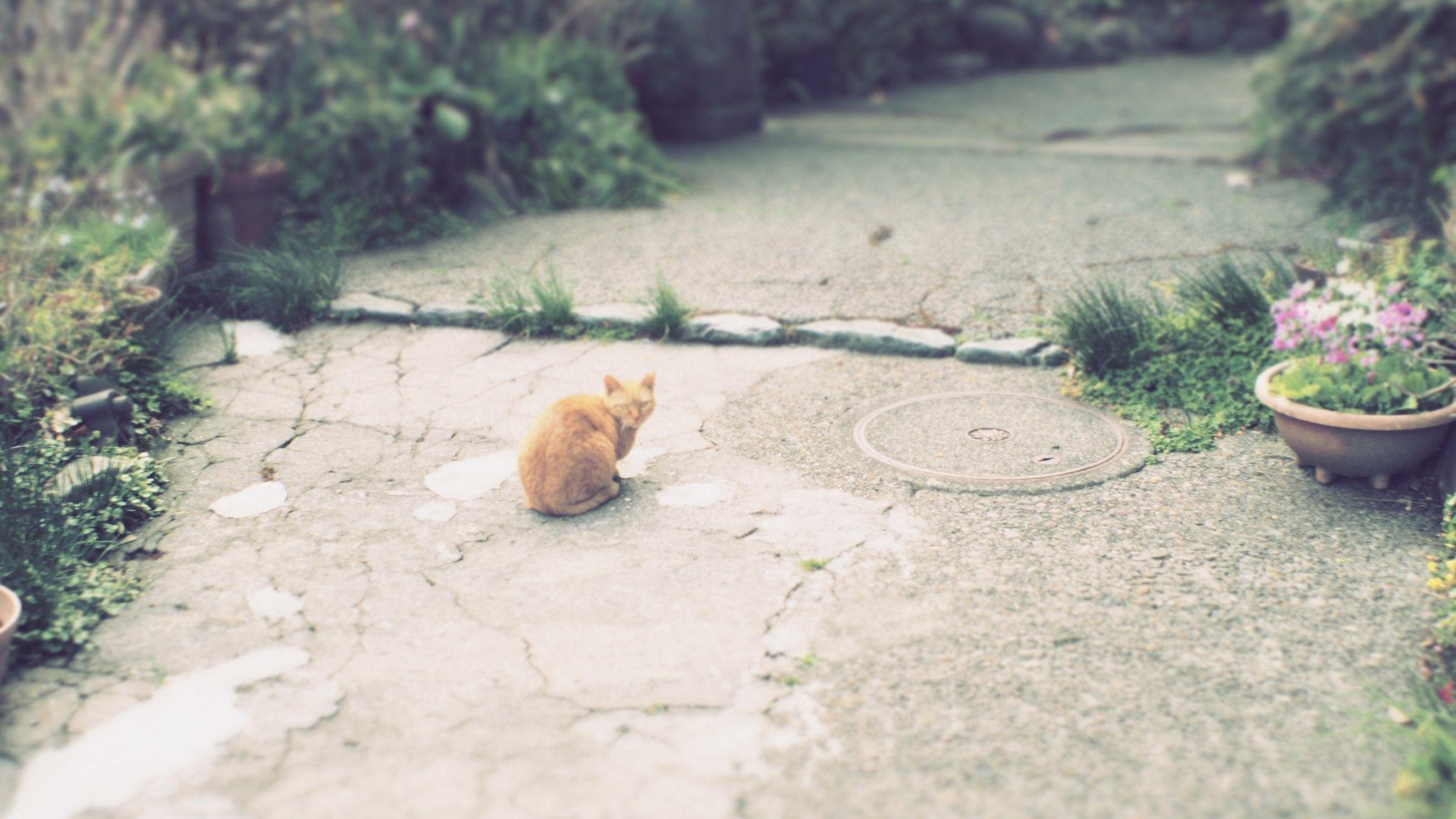 【OLYMPUS】アートフィルターとオールドレンズのお話