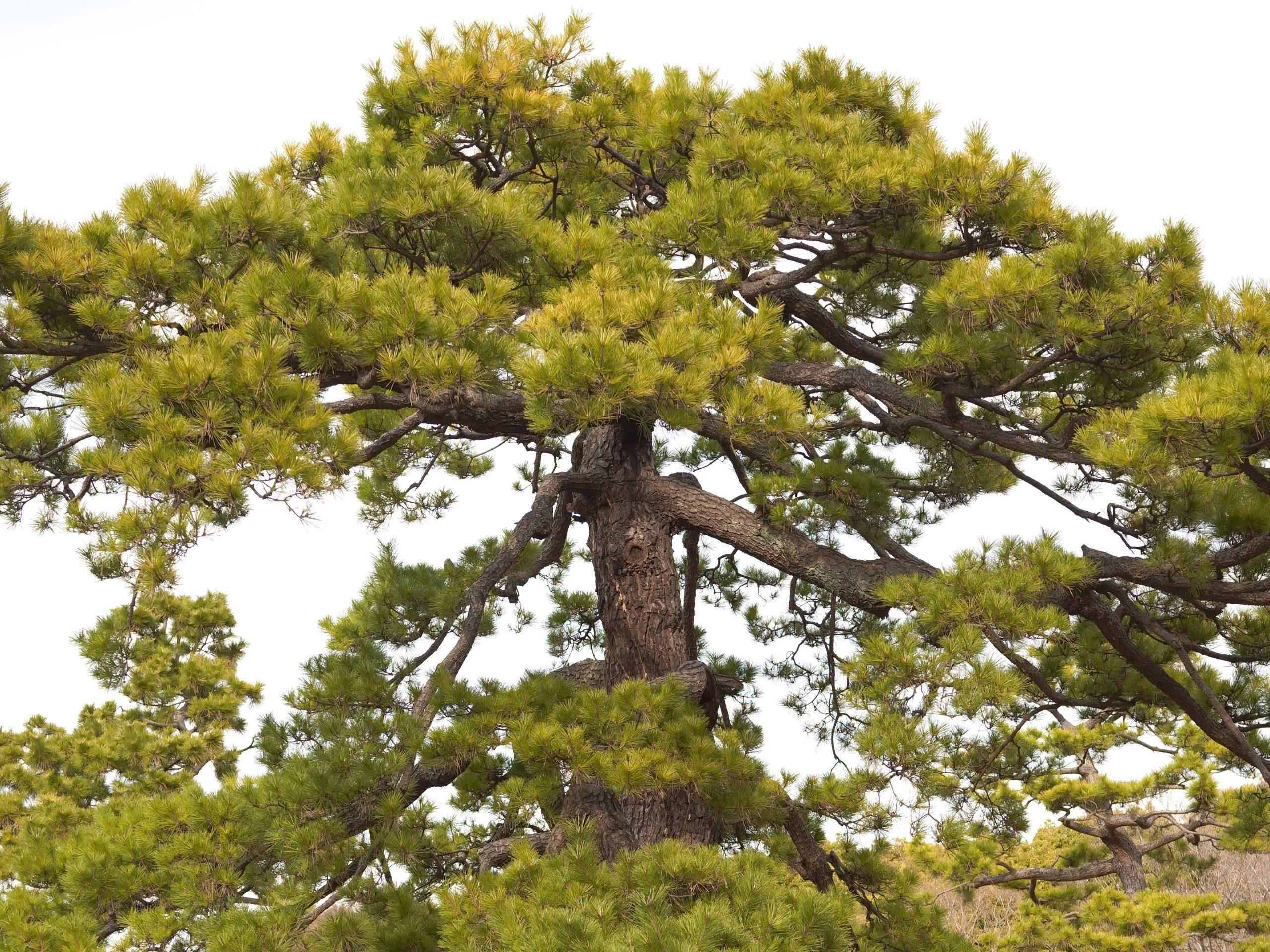 【SIGMA】『fp』と行く代々木公園