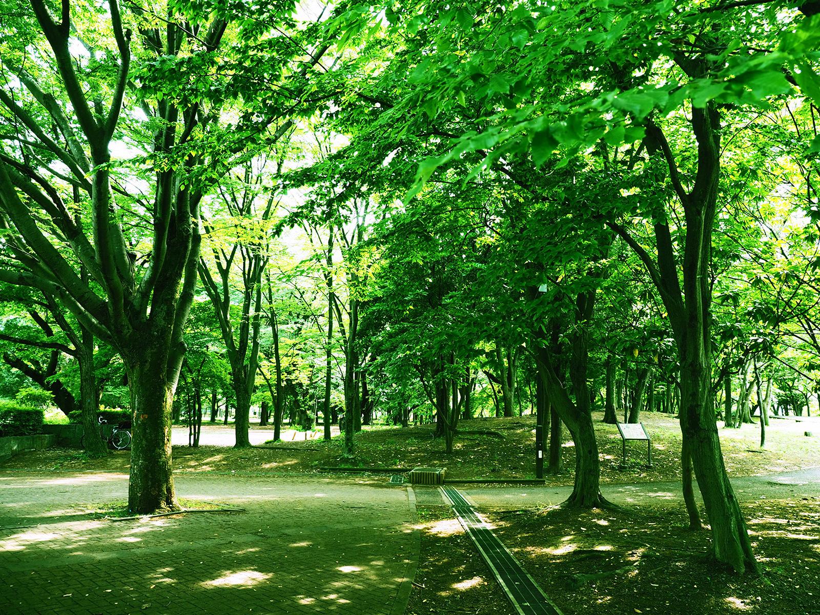OM-D E-M1 Mark IIで撮り歩き~in 府中の森公園