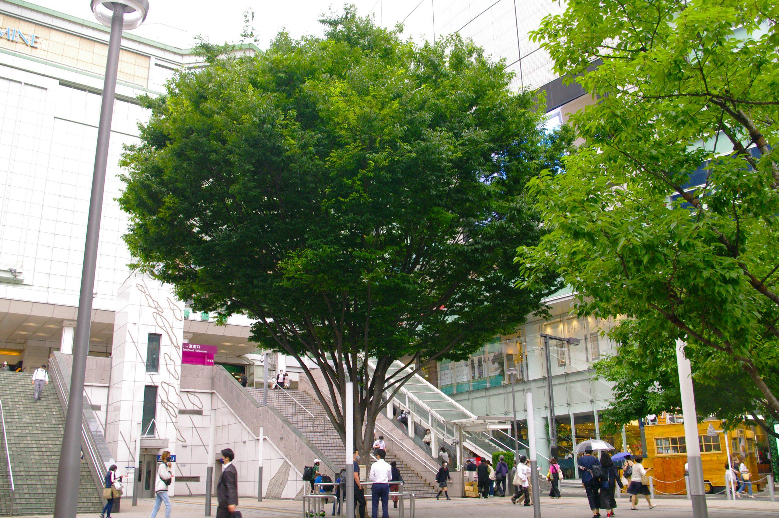 【PENTAX】緑の街 新宿