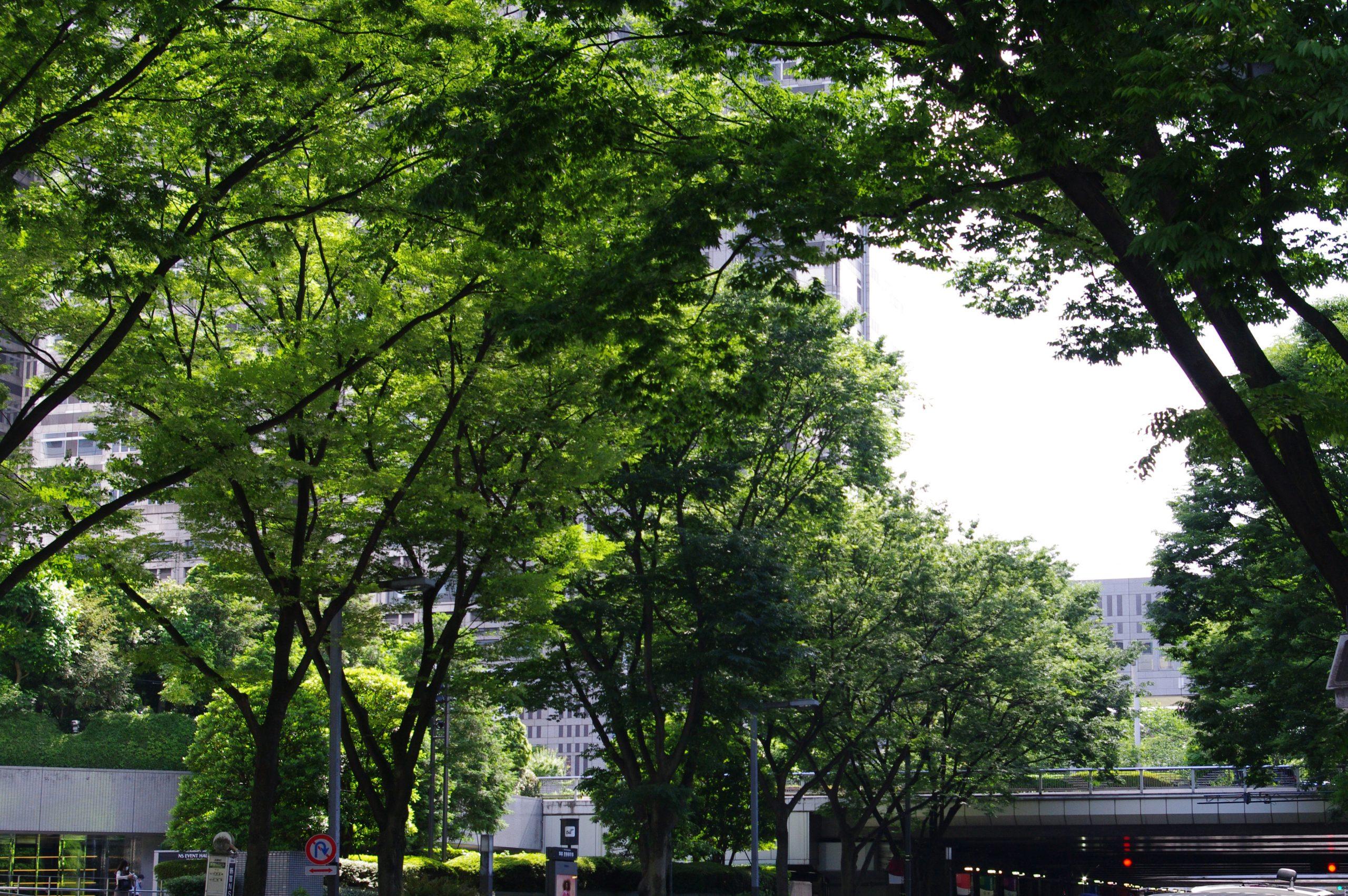 【PENTAX】続・緑の街 新宿